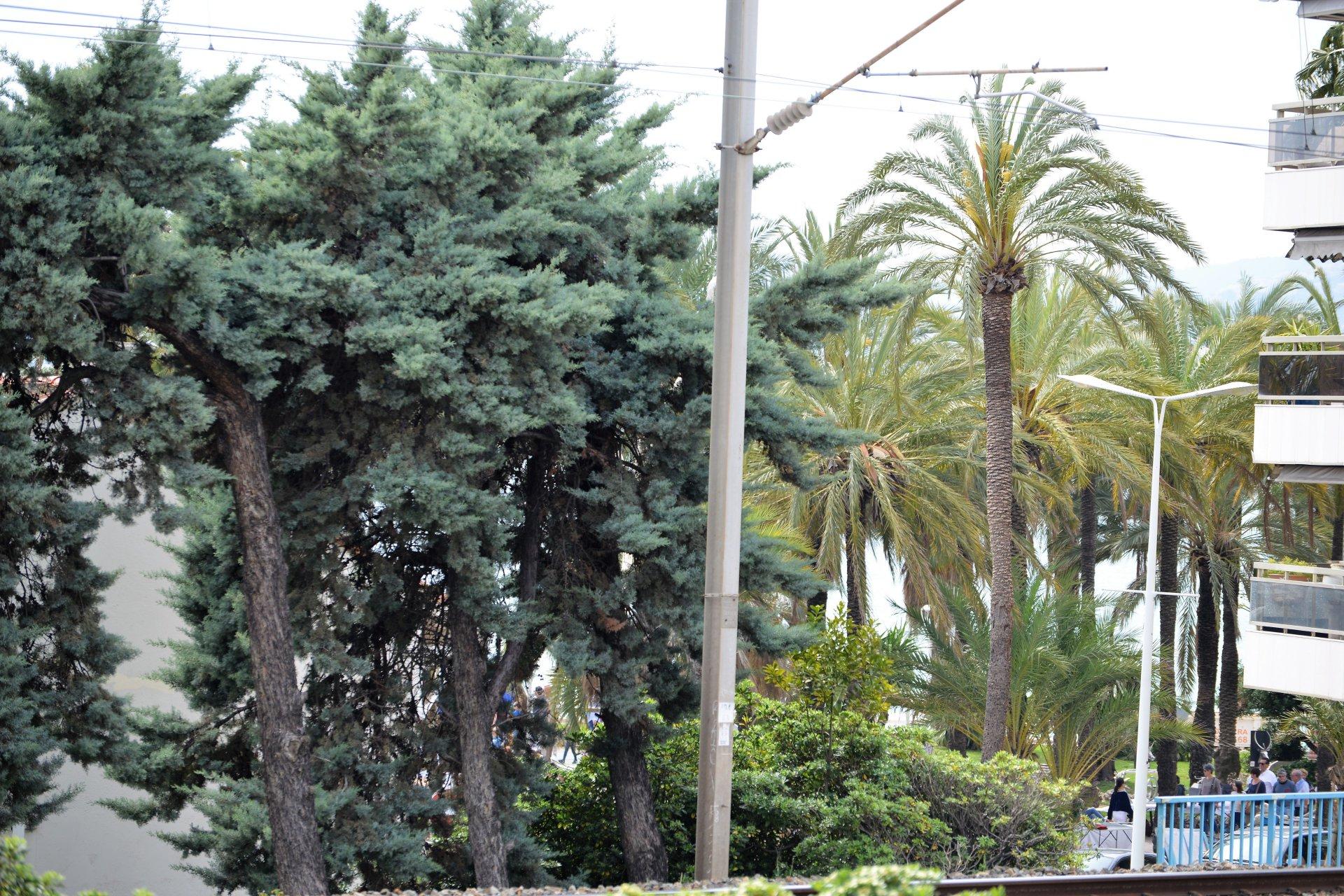 Affitto Appartamento - Cannes