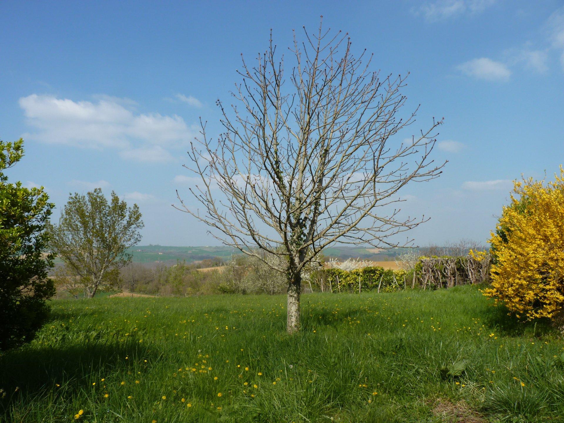 Village house T4 with garden, Pyrenees view, 10 mn Aurignac