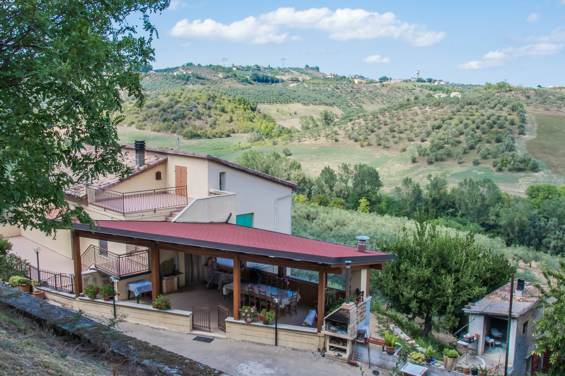 House with olive grove and vinyard!