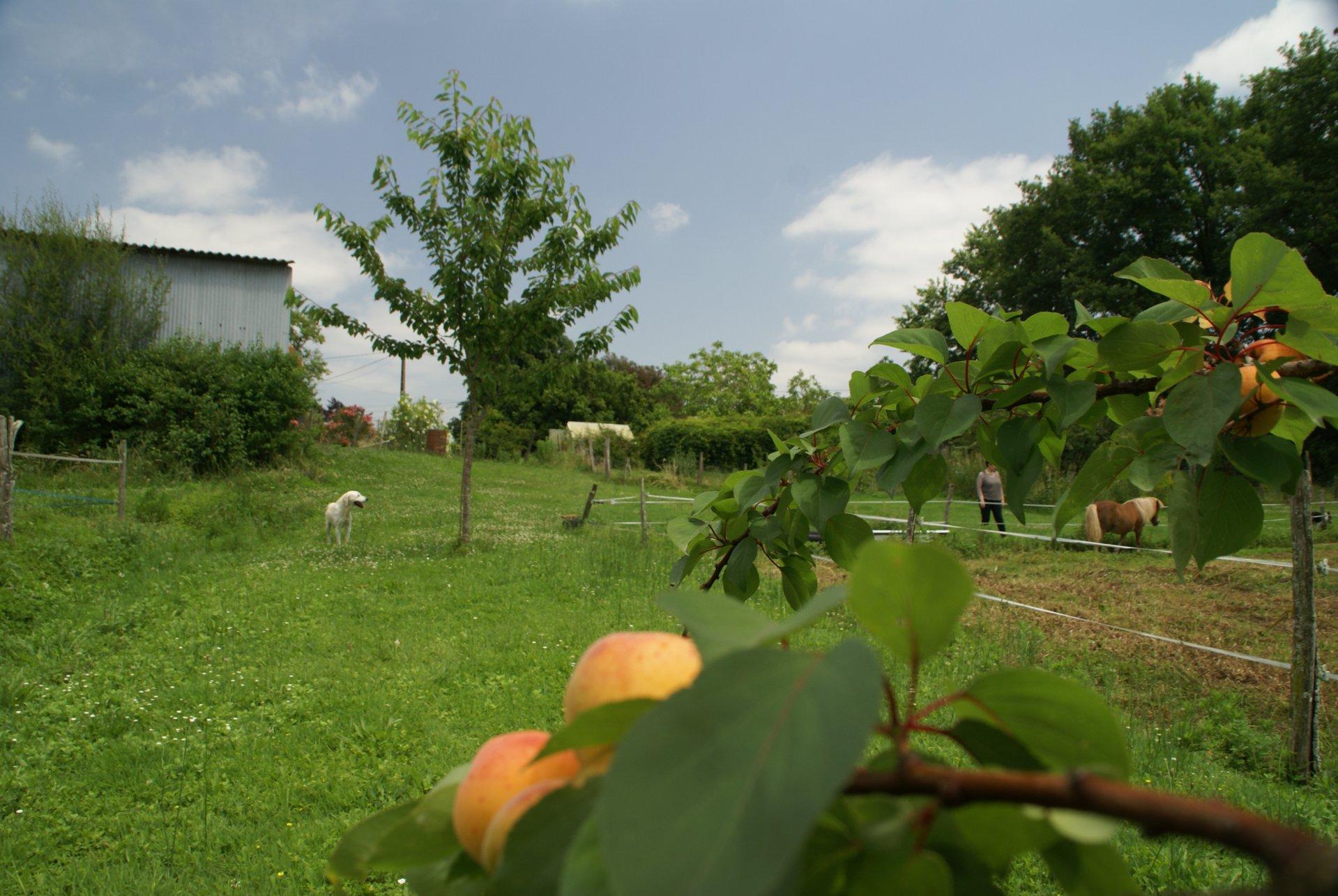 Ruim huis met terrein op  rustige plek in de Gers, Midi-Pyreneeën