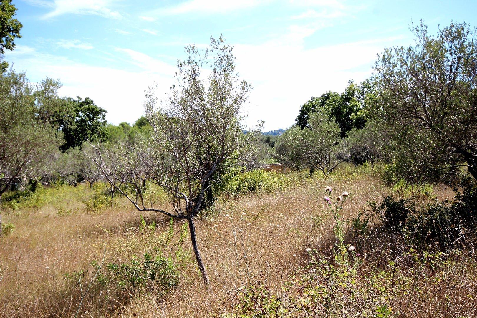 Sale Plot of land - Opio