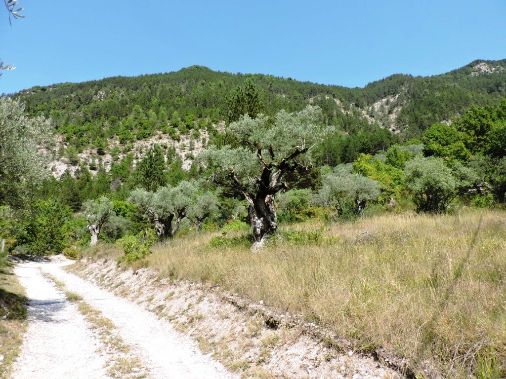 ENTREVAUX, bergerie en position dominante