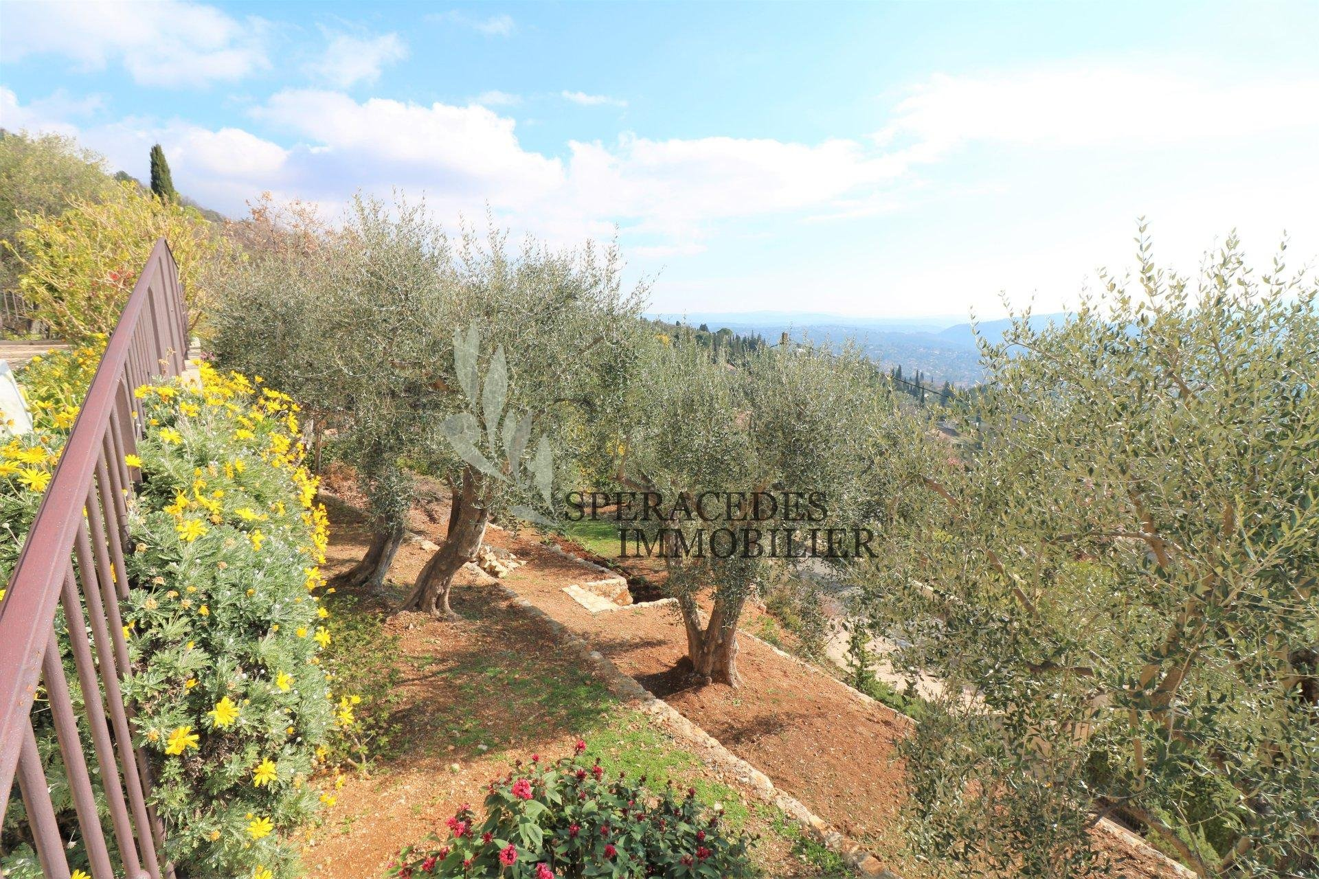 Garden with olive grove