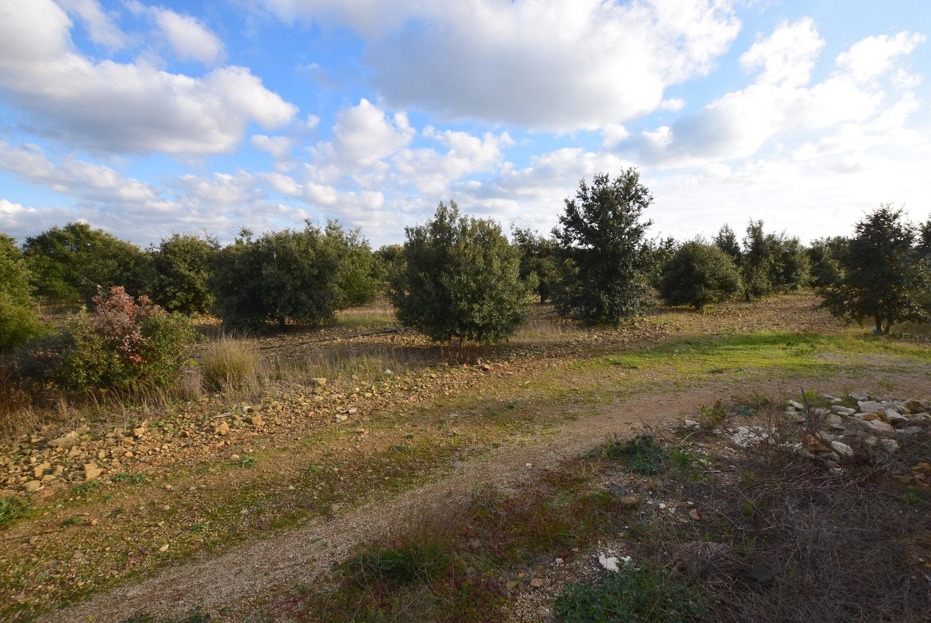 Sale Vineyard property - Narbonne