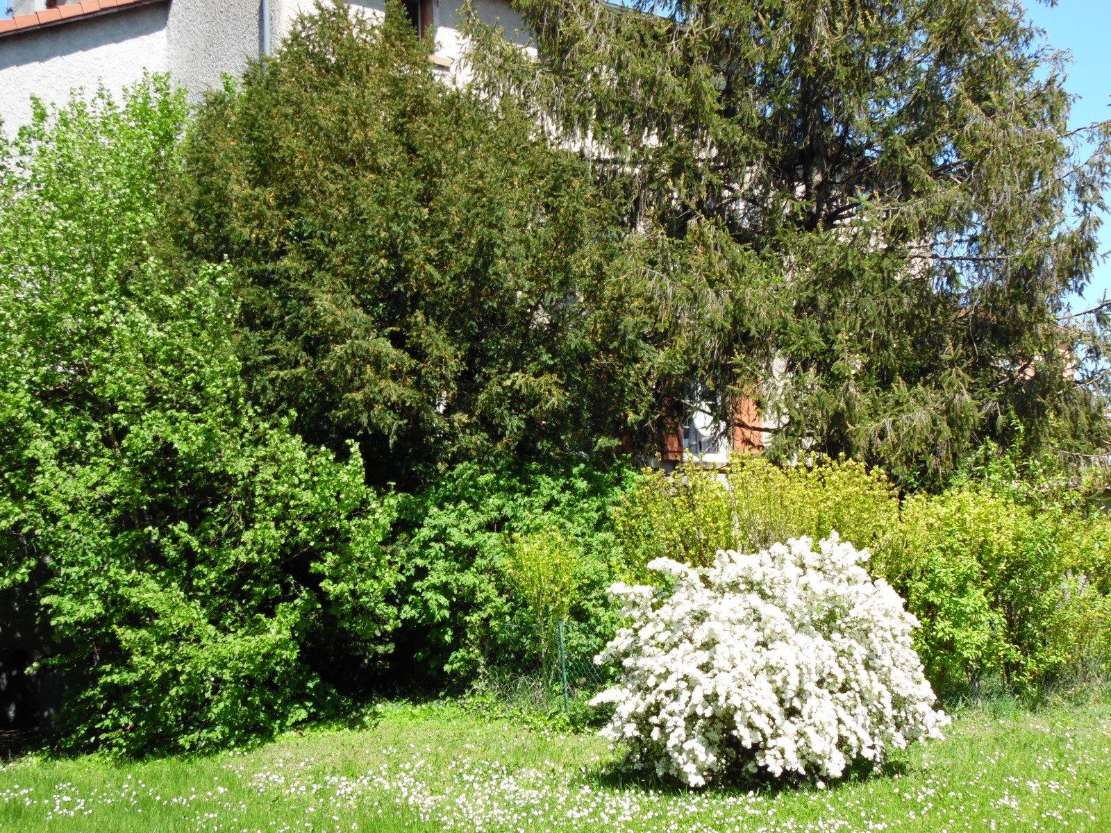 Loué par notre agence - T2 au calme sur jardin à Ste Foy lés Lyon