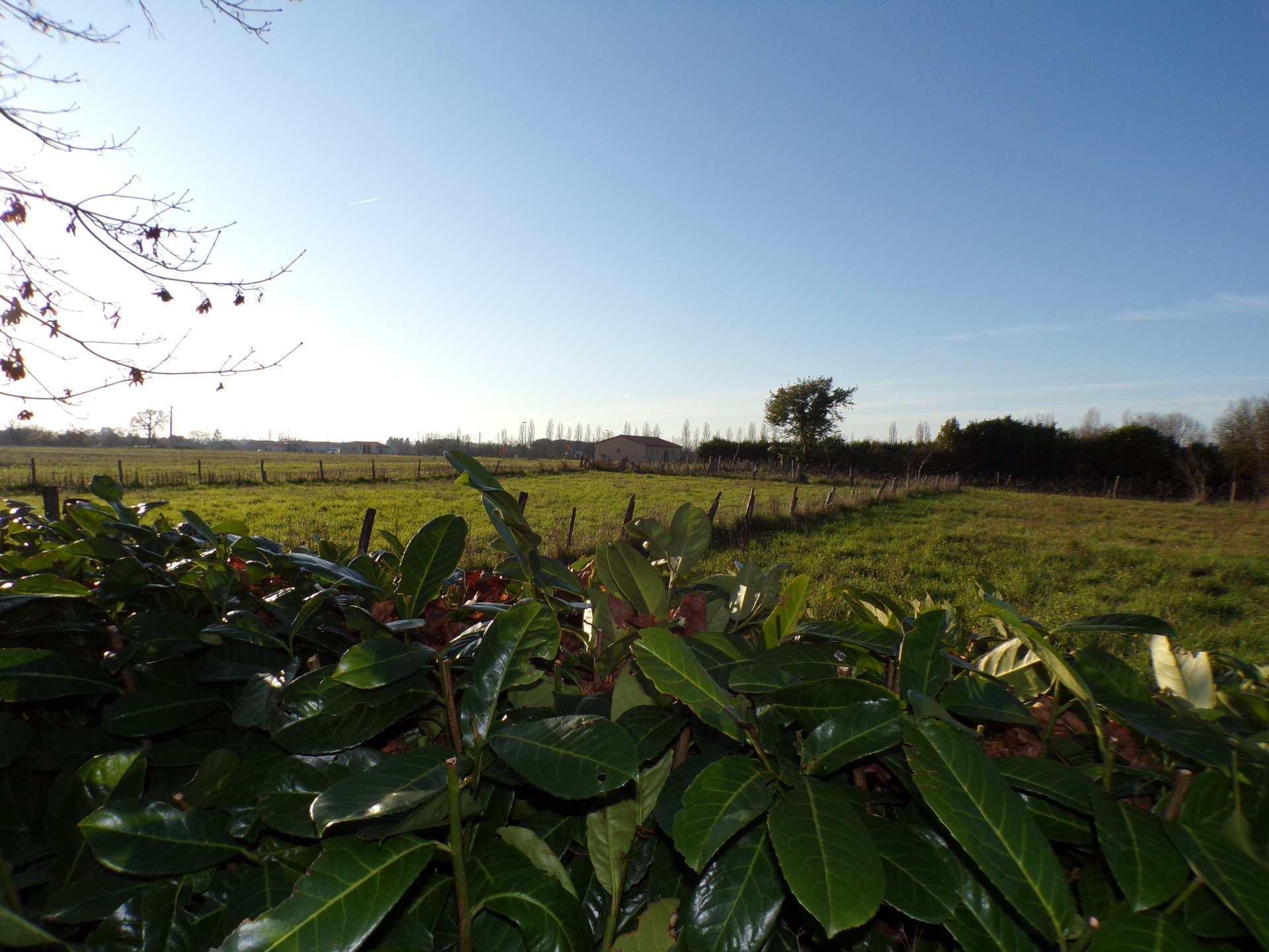 Ensemble immobilier et terrains à bâtir à Villefagnan