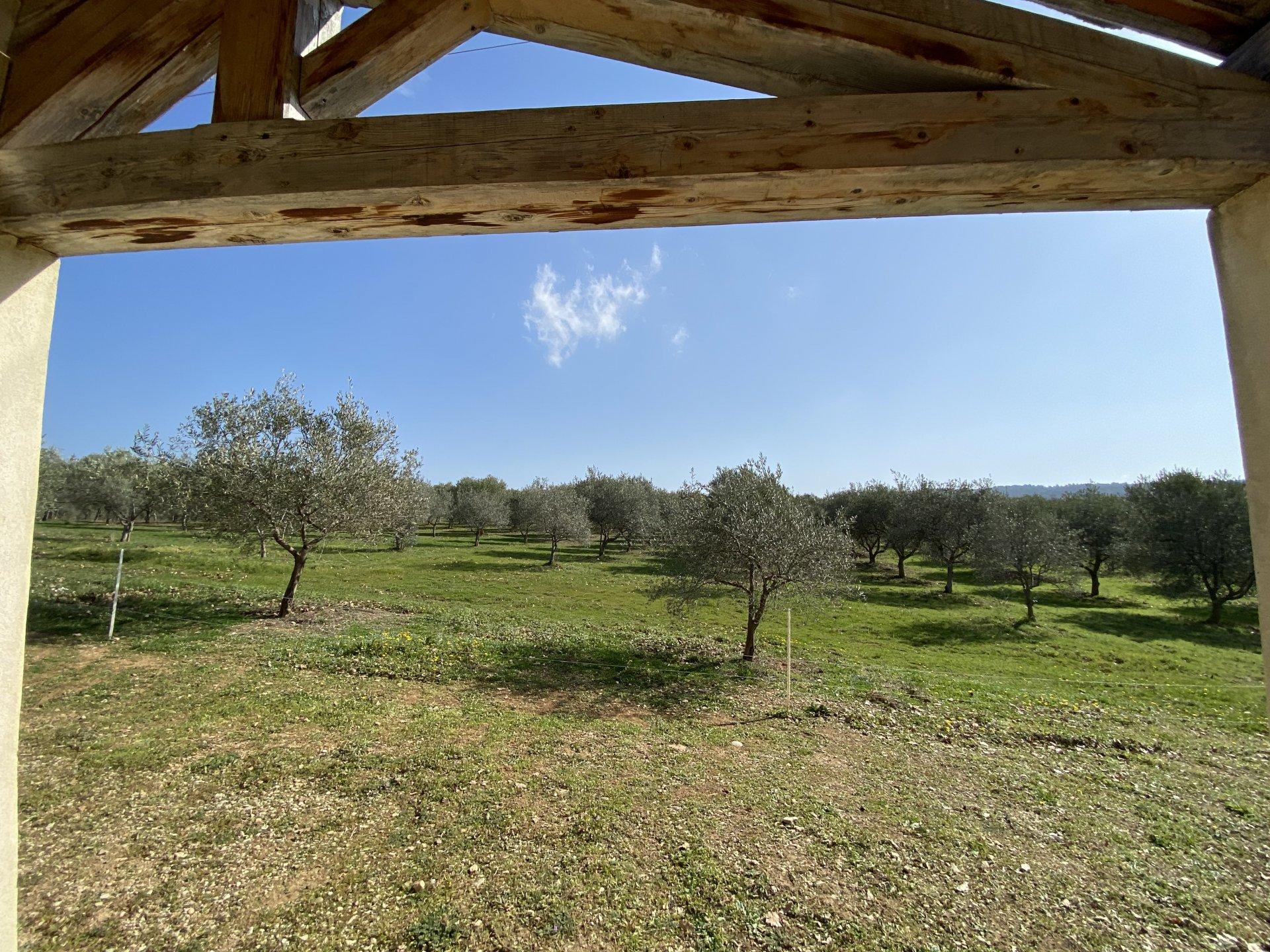 Mas   avec oliveraie et chênes truffiers