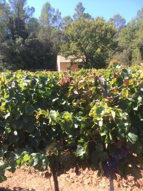 CORRENS Cabanon dans les vignes