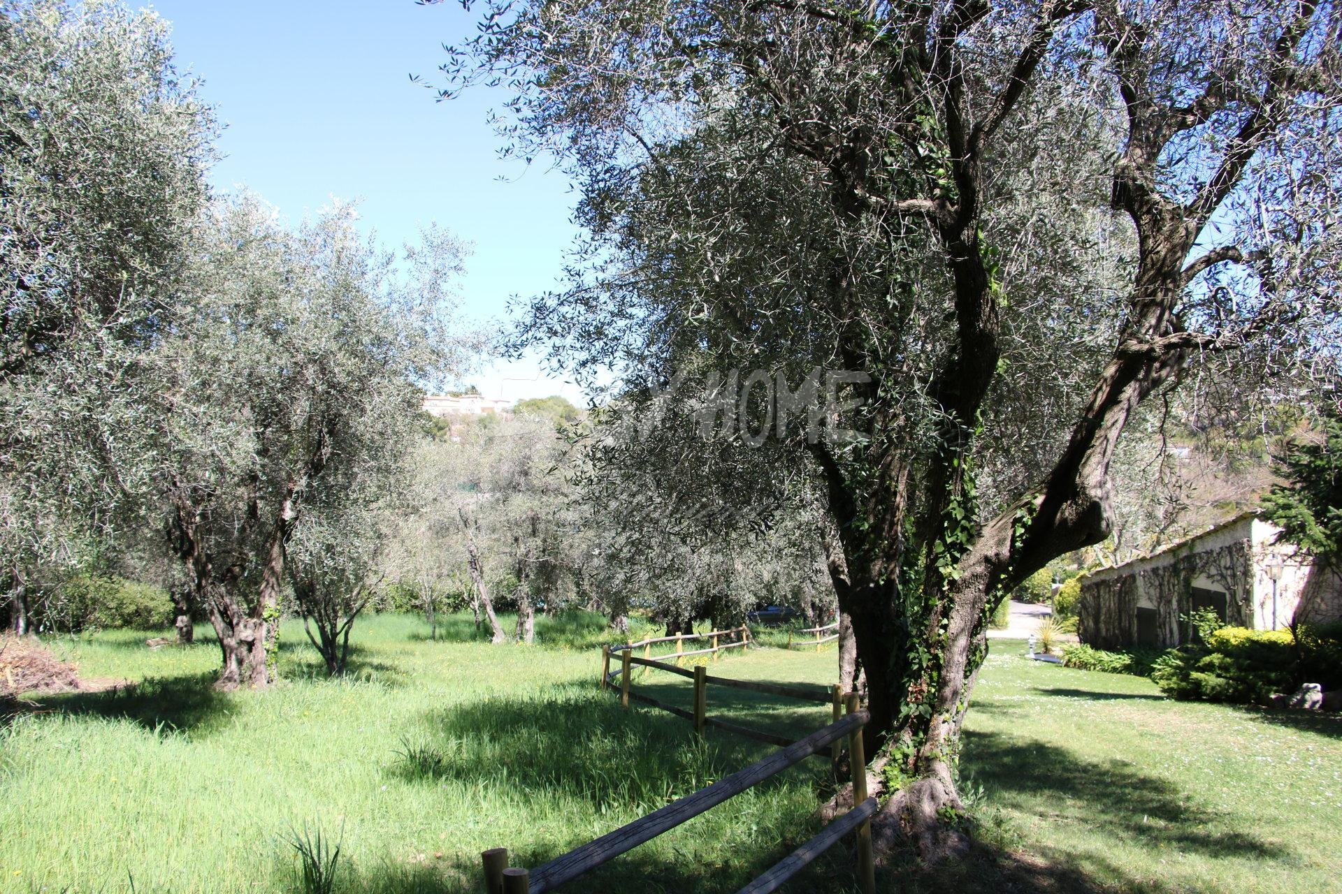 Pruchase/Sale Land with sea view and old village of Mougins