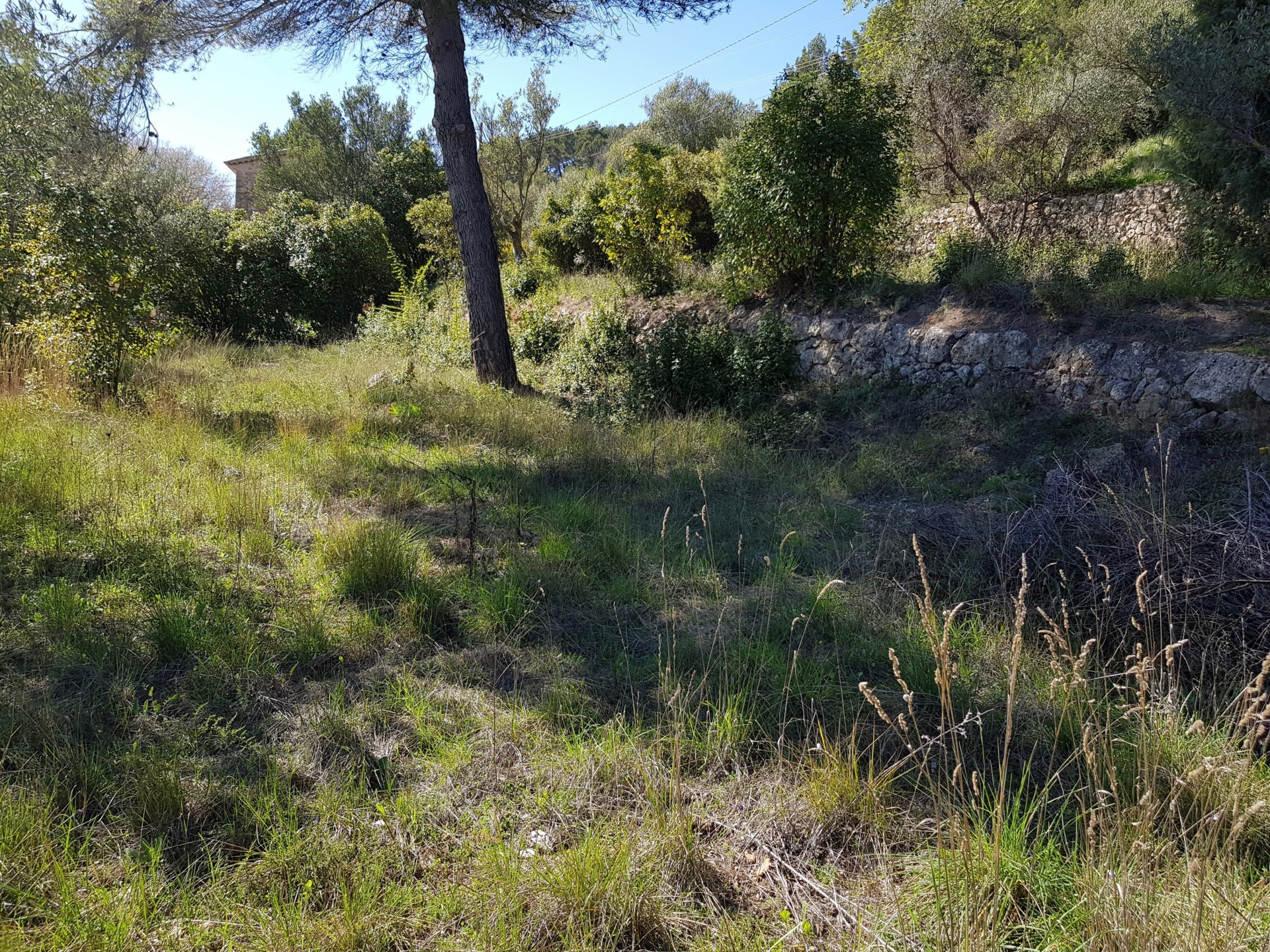 Nice building plot for sale in Lorgues.