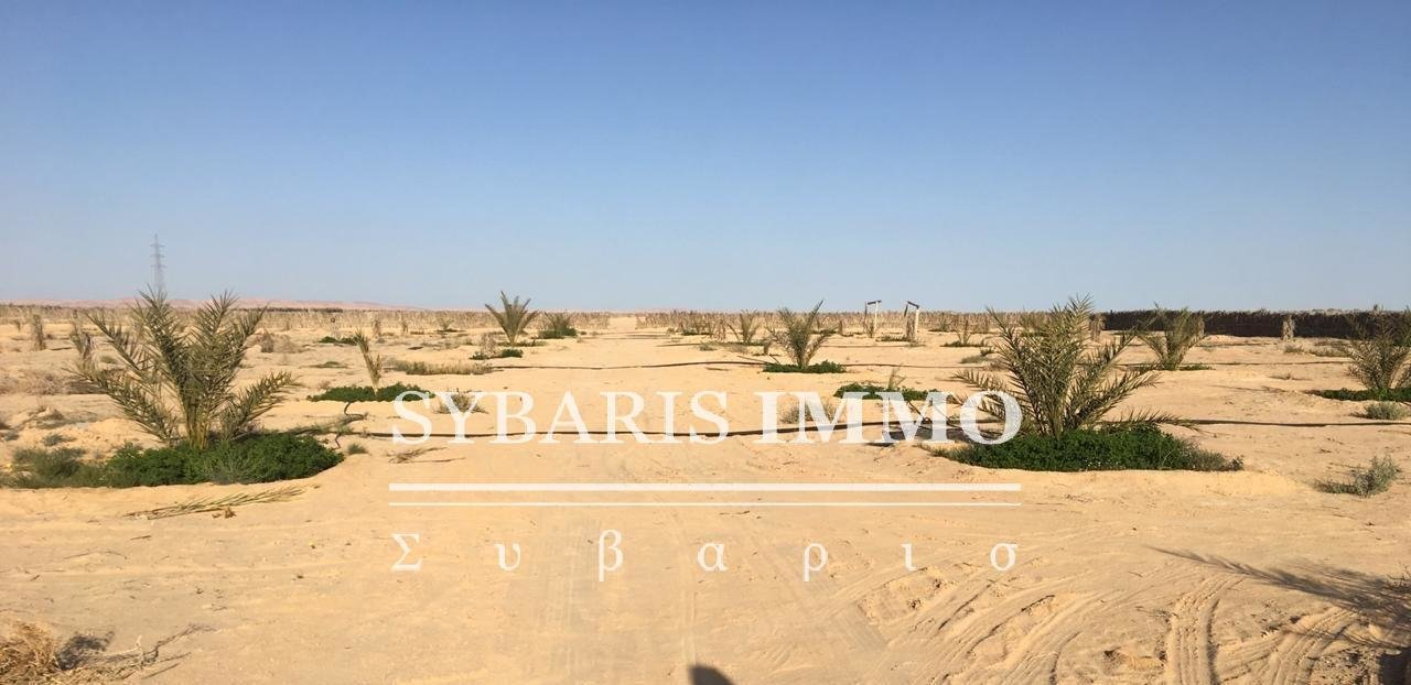 TERRAIN AGRICOLE A KEBILI JEMNA - Tunisie