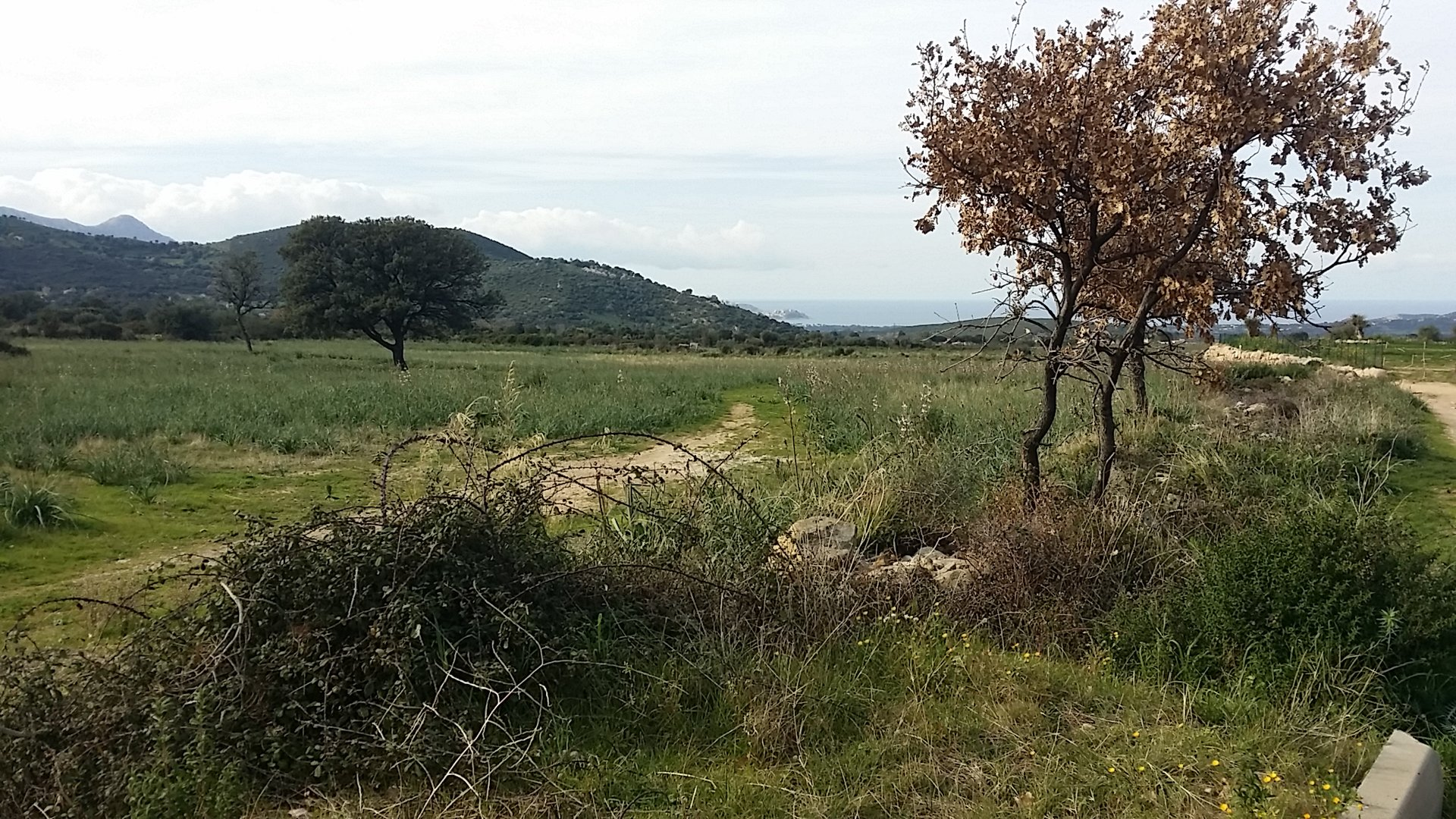 Sale Building land - Calvi