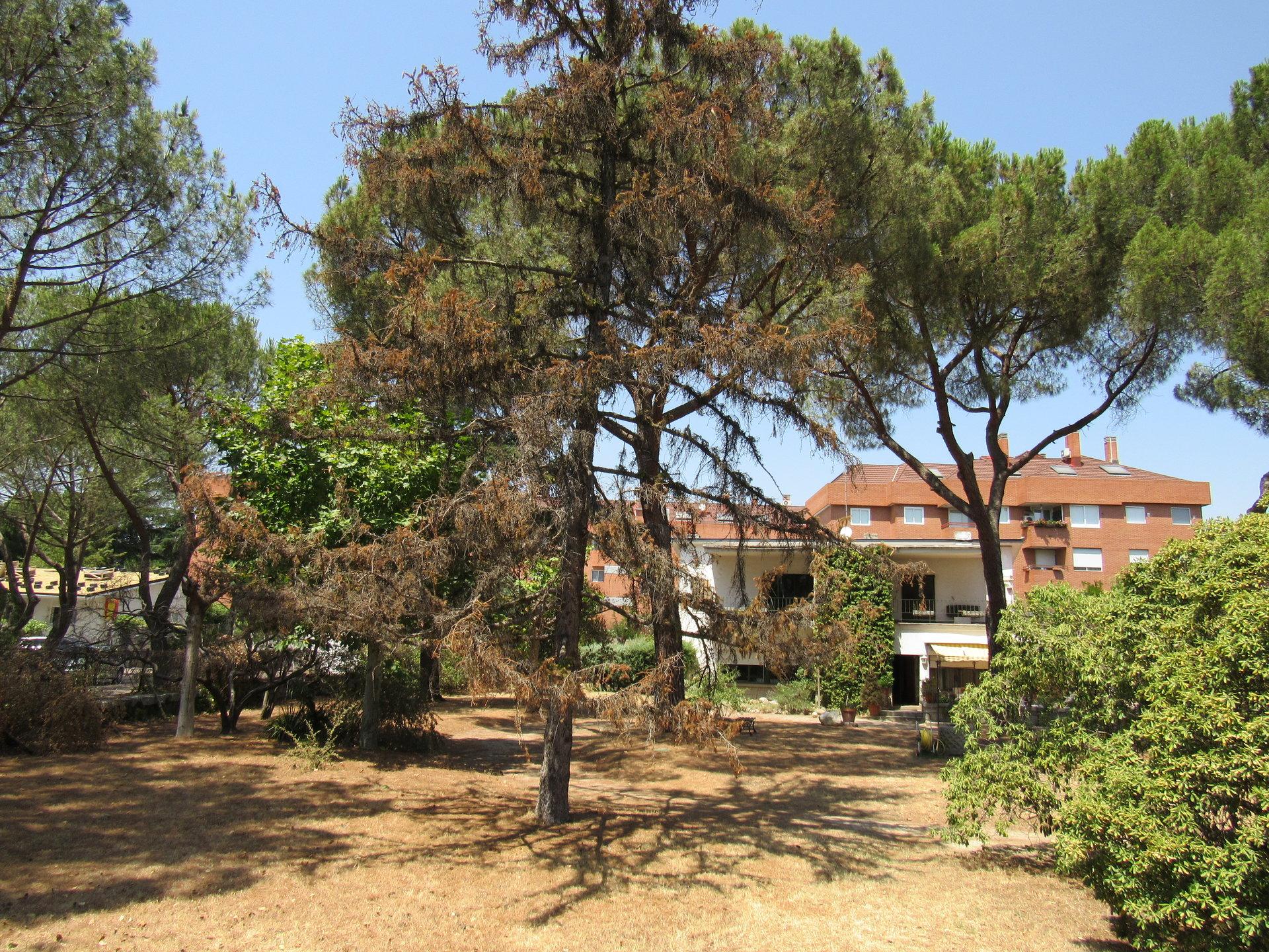 Sale Plot of land Las Rozas de Madrid