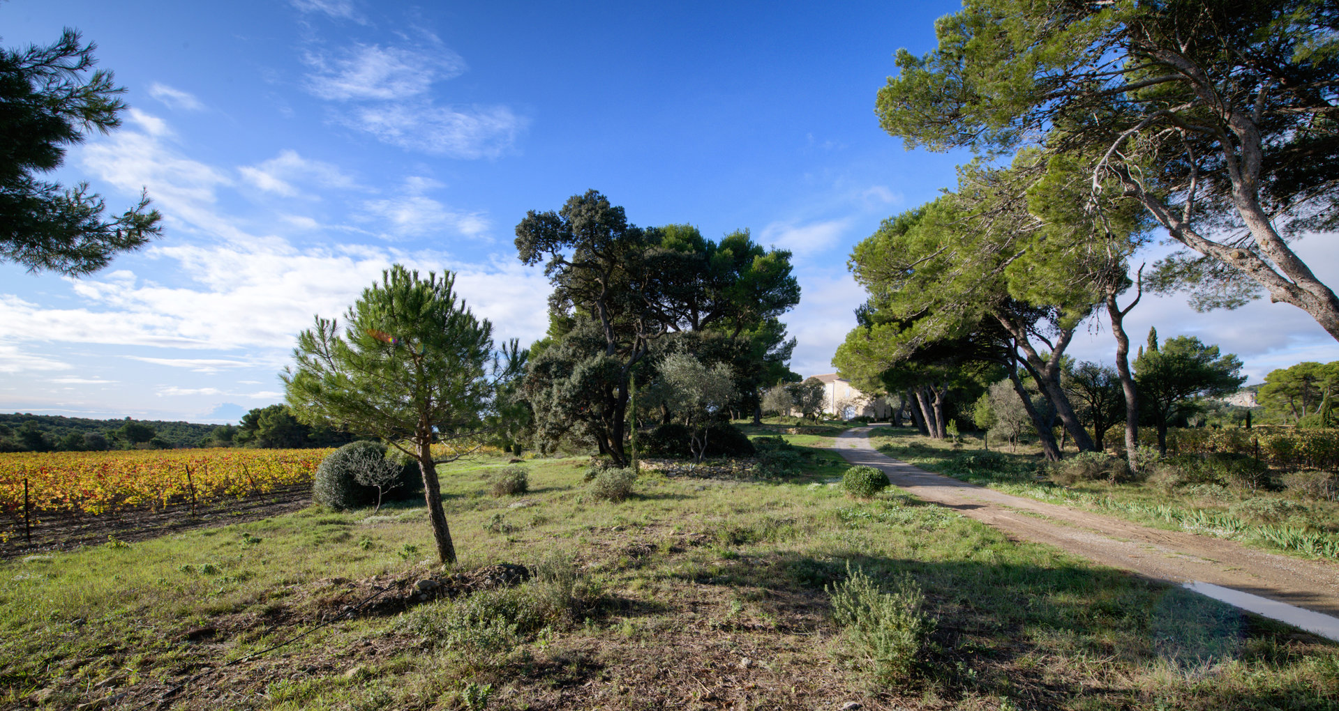 EXCLUSIF TERRAIN NARBONNE