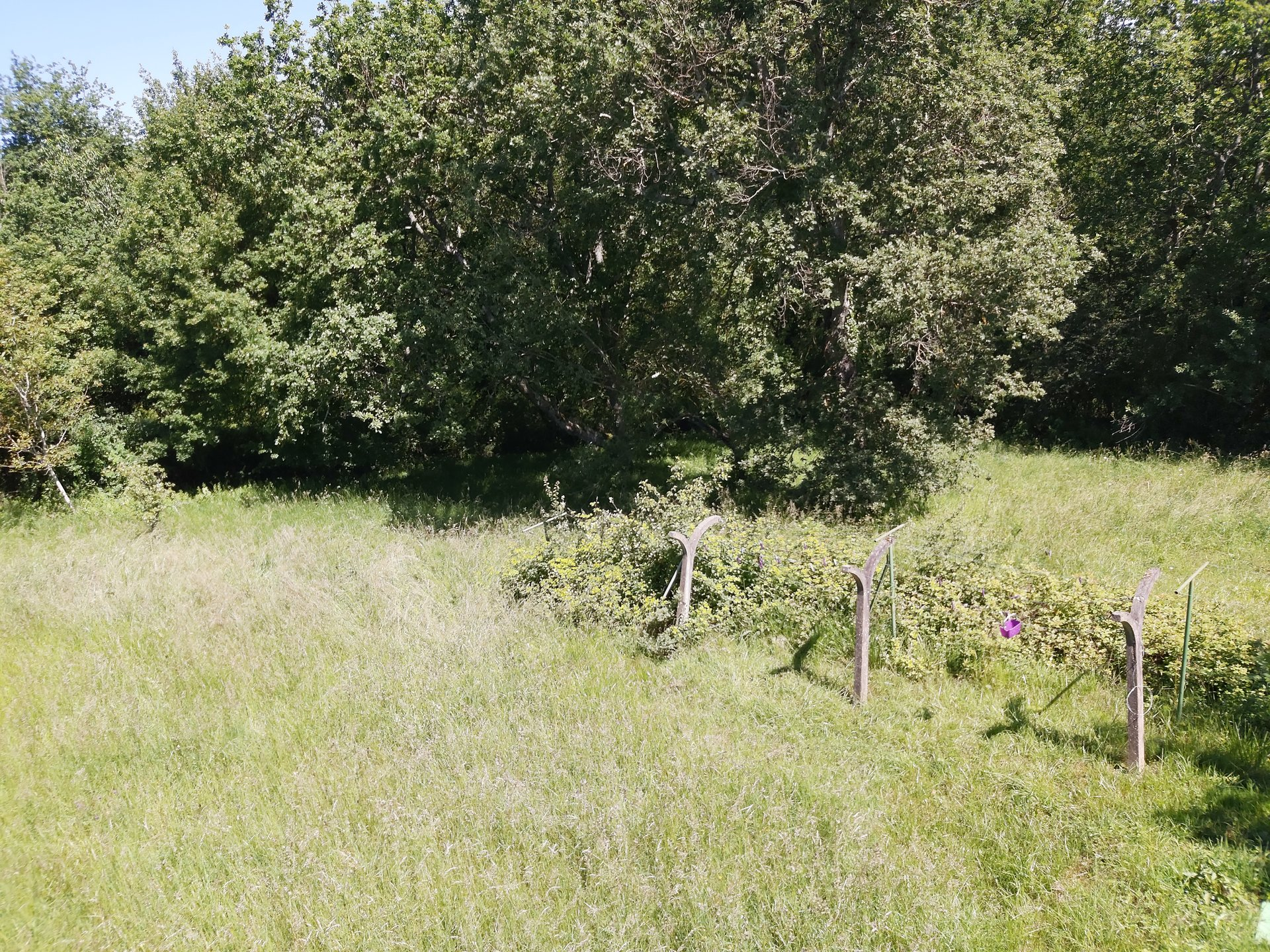 A rare opportunity in Aurignac, 1700 m² building plot with orchard and oaks trees