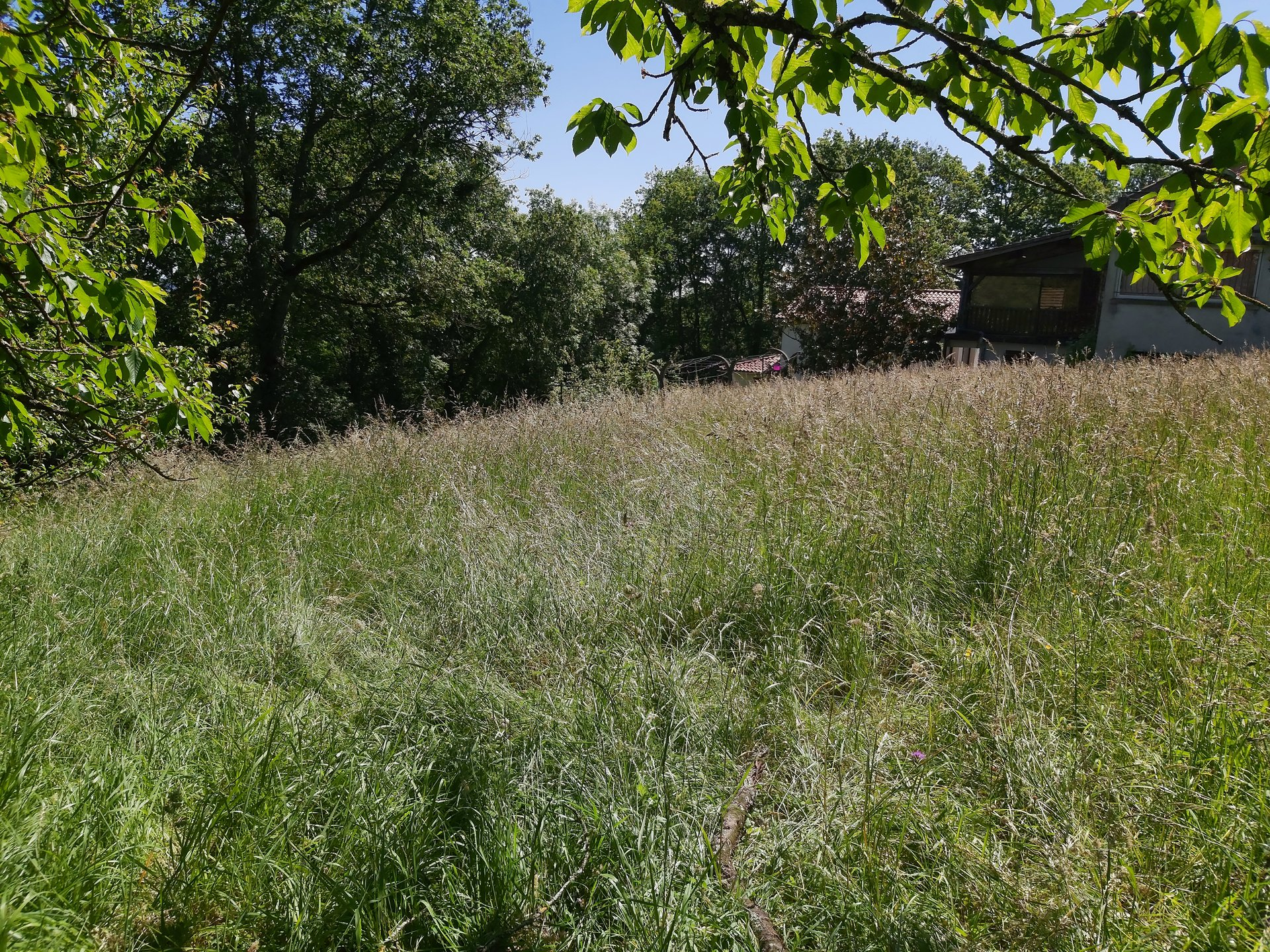 Exclusive in Aurignac, buildng plot with orchard and oaks trees