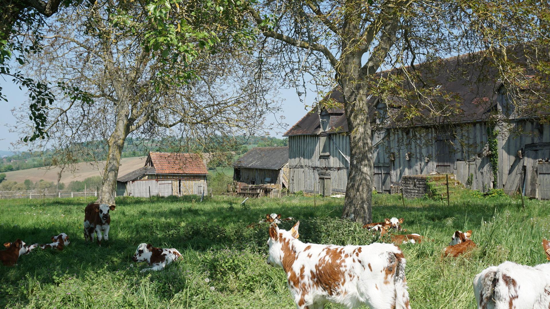 PAYS D'AUGE-ORNE Un manoir avec une vue magnifique sur la campagne et des dépendances