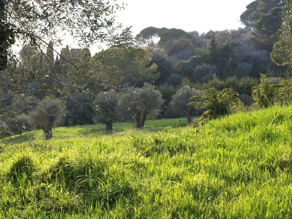 Achat / Vente terrain   Mougins  45 000m2Unique