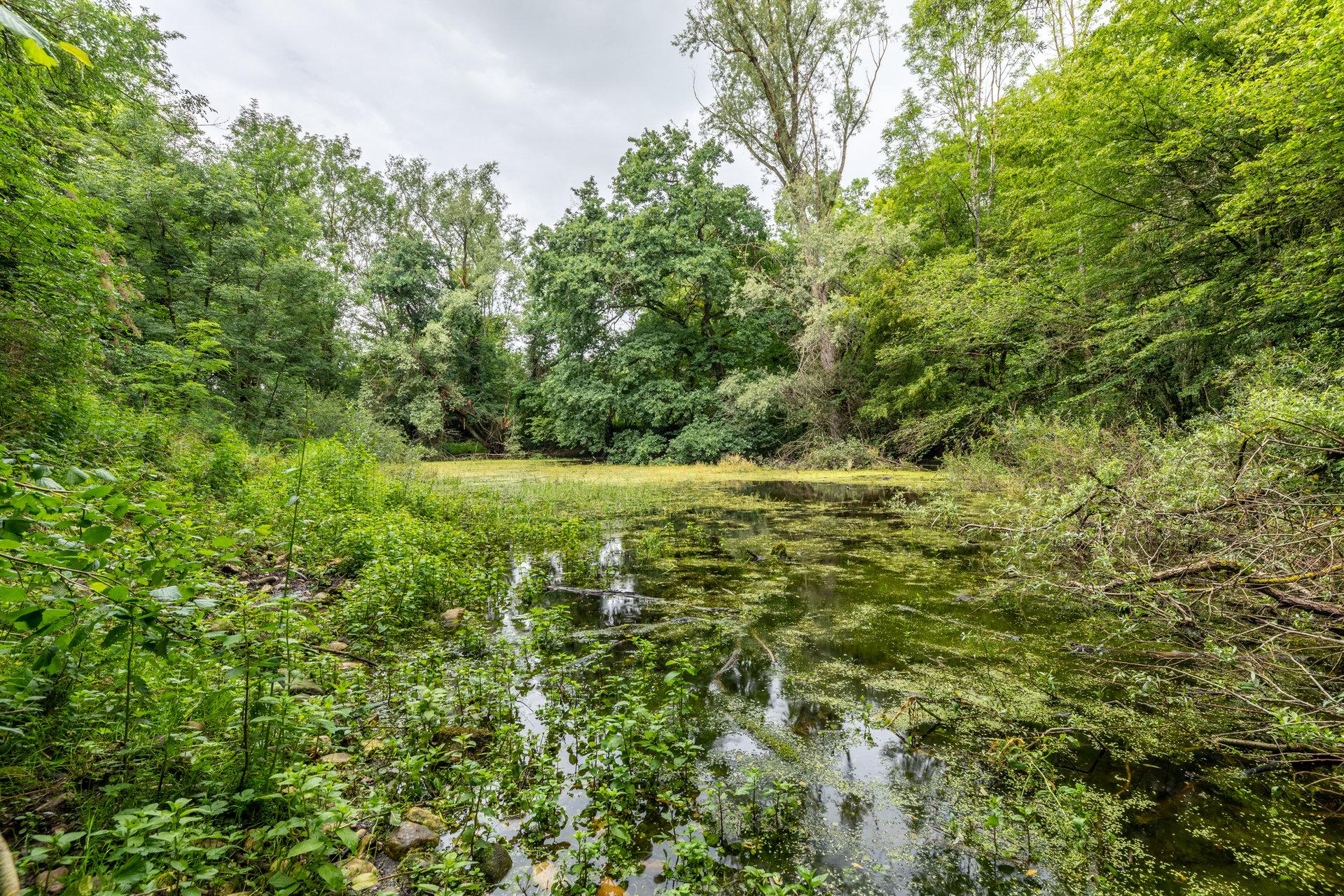 Propriété boisée de 25 HA avec étangs - A 1 heure de LYON
