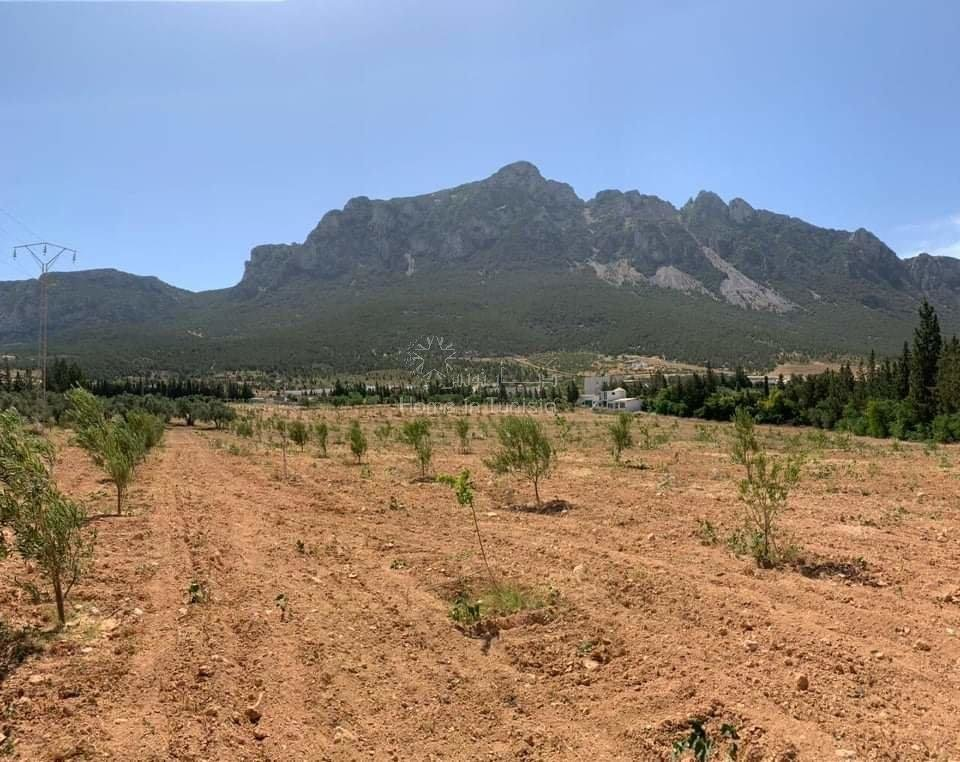 Magnifique terrain agricole de 4 hectare a MORNEG