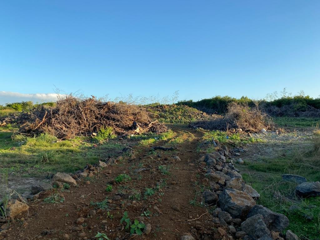 Residential Land in Pereybere