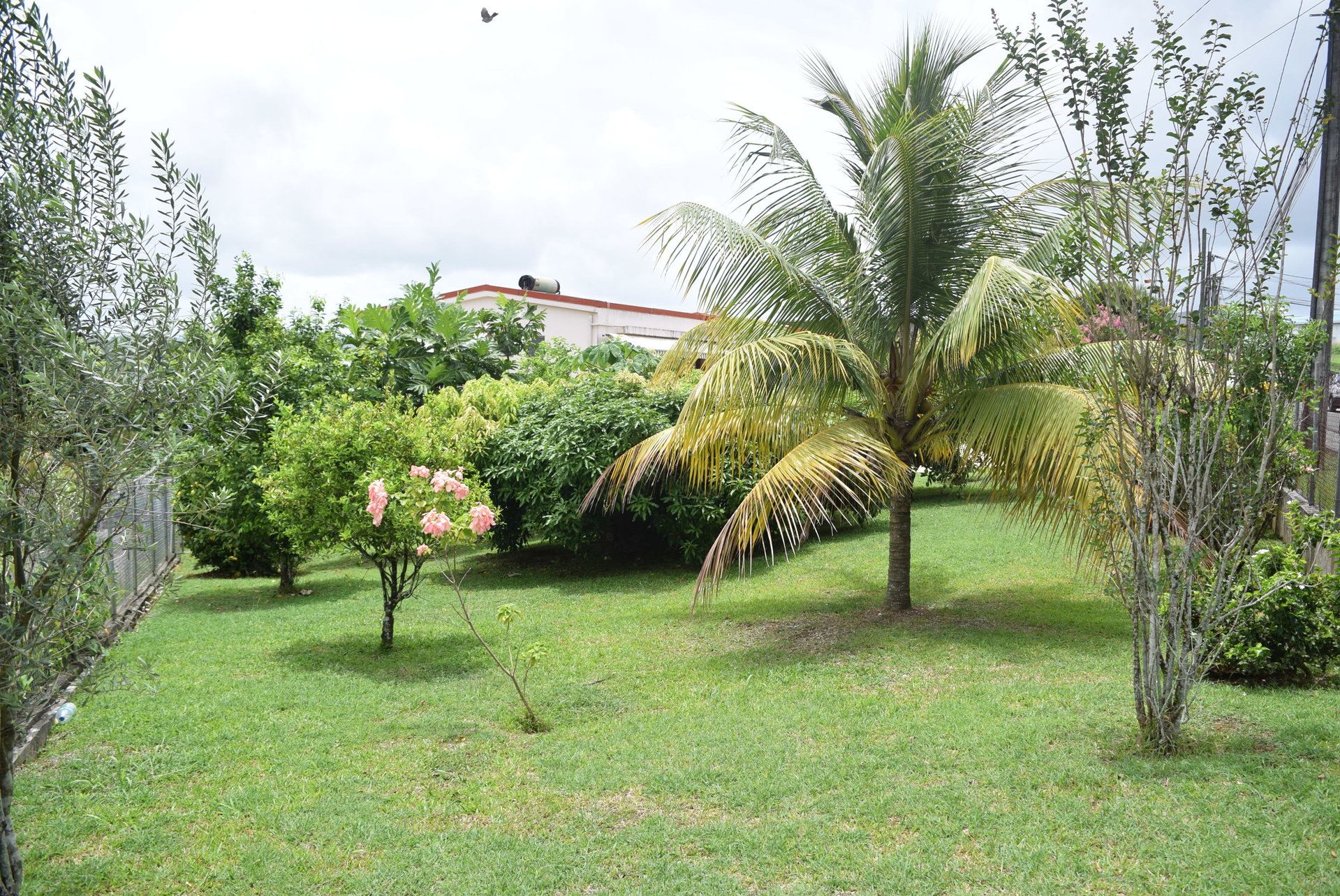 Sale Villa - Le Lamentin - Martinique
