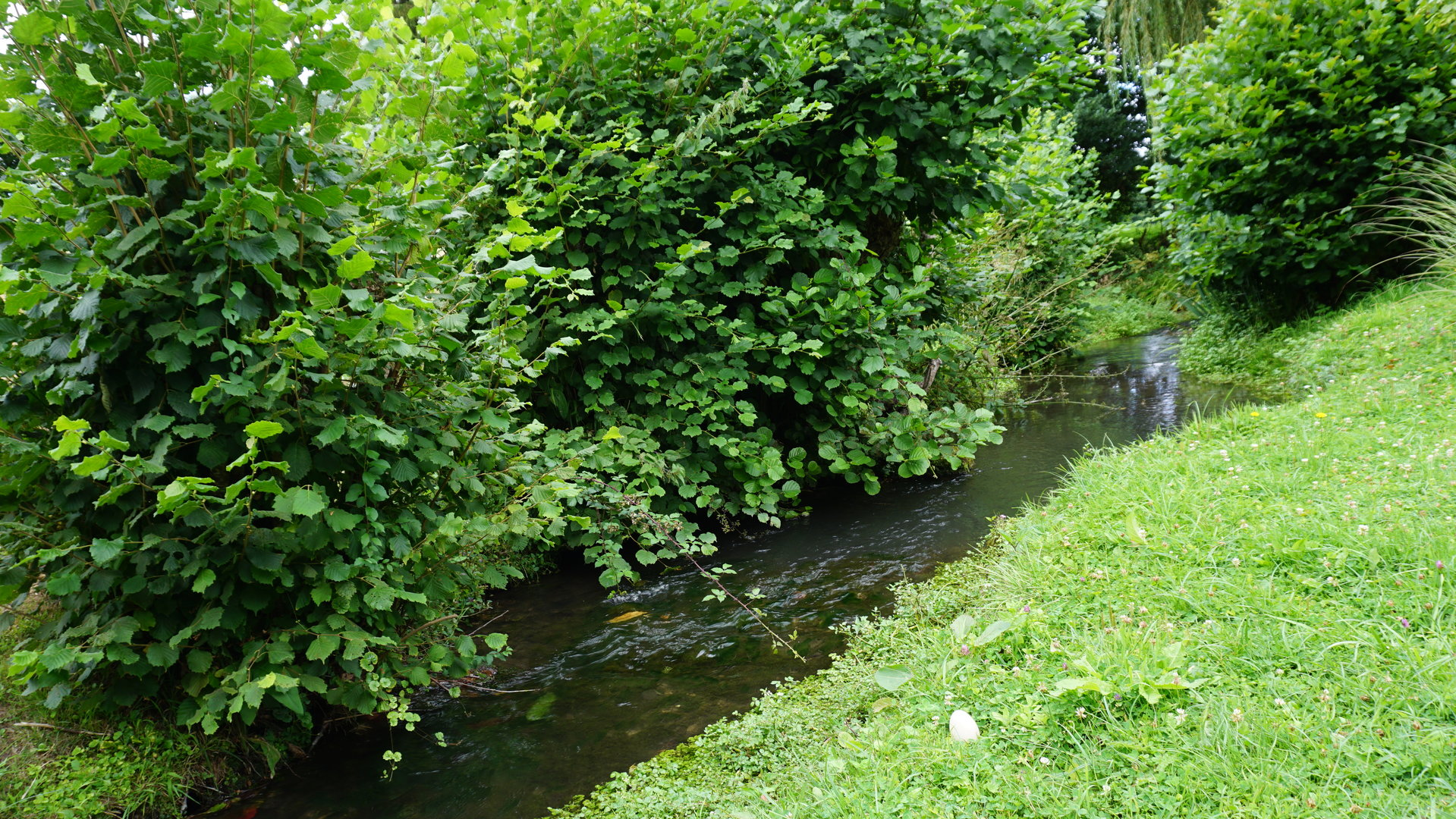 PAYS D'AUGE-CALVADOS Un Manoir avec 2ha53a94caha de prairie, un ruisseau qui borde la partie jardin d'agrément.
