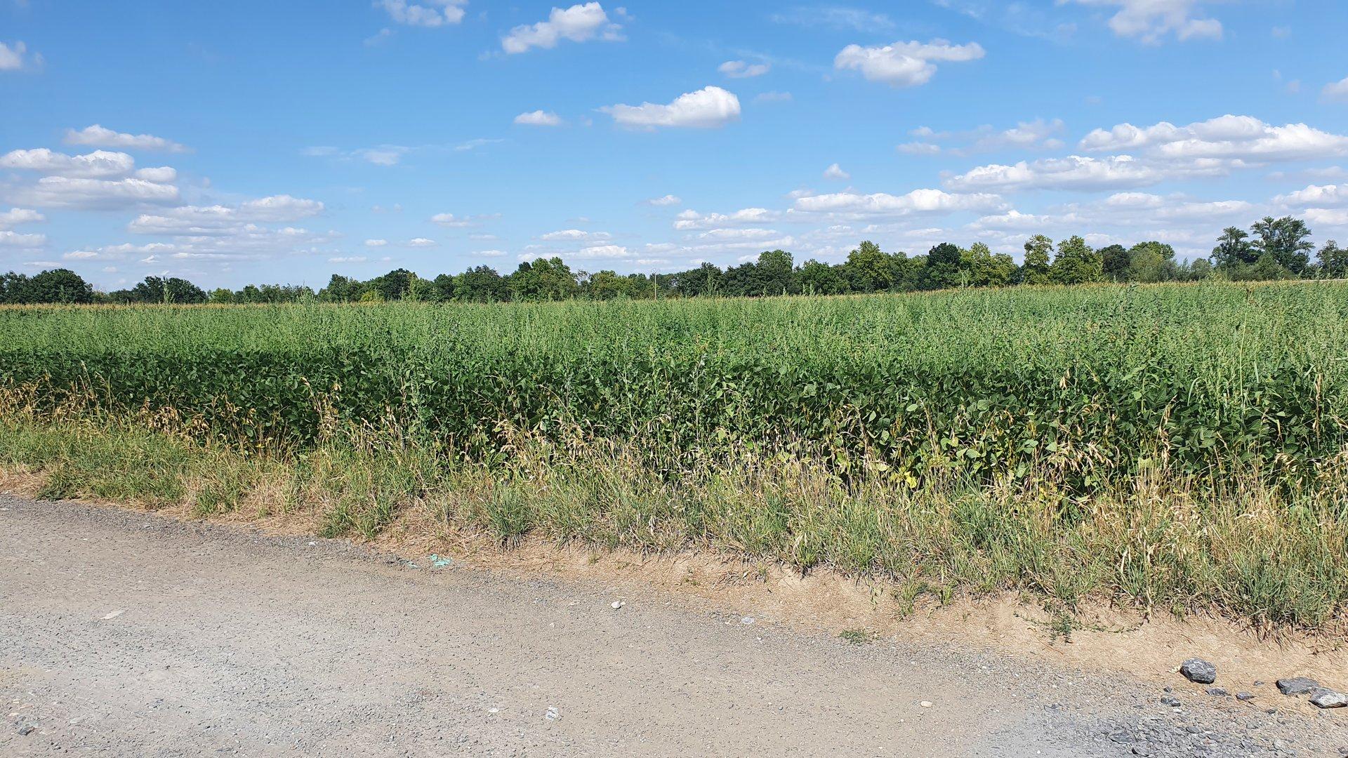 Très beau terrain agricole