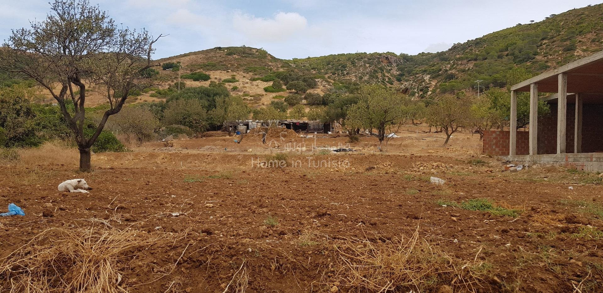 Terrain agricole vue sur mer a vendre a ghar el melh bizert