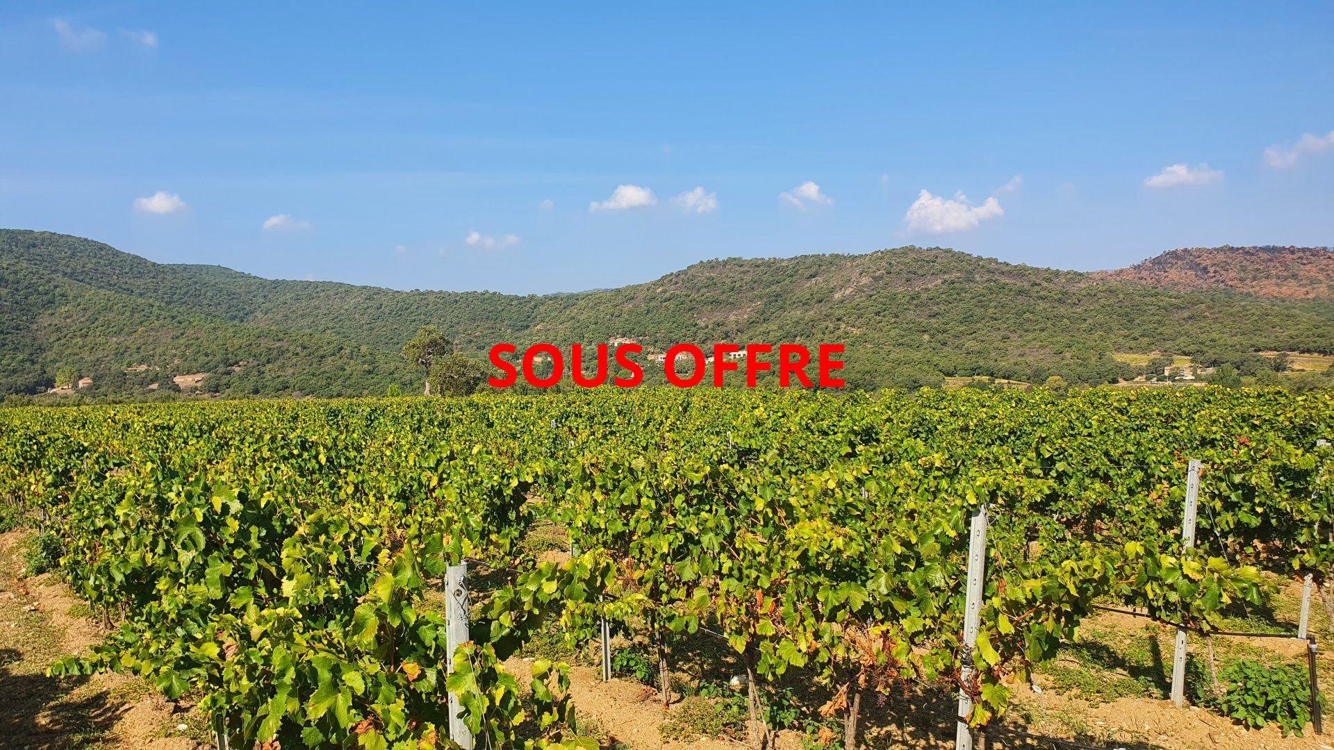 Gulf of Saint Tropez - unique vineyard for sale