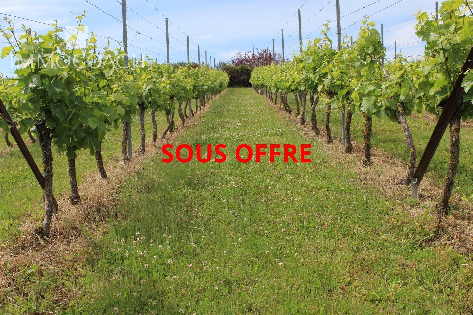Verkauf Weingut - Saint-Tropez