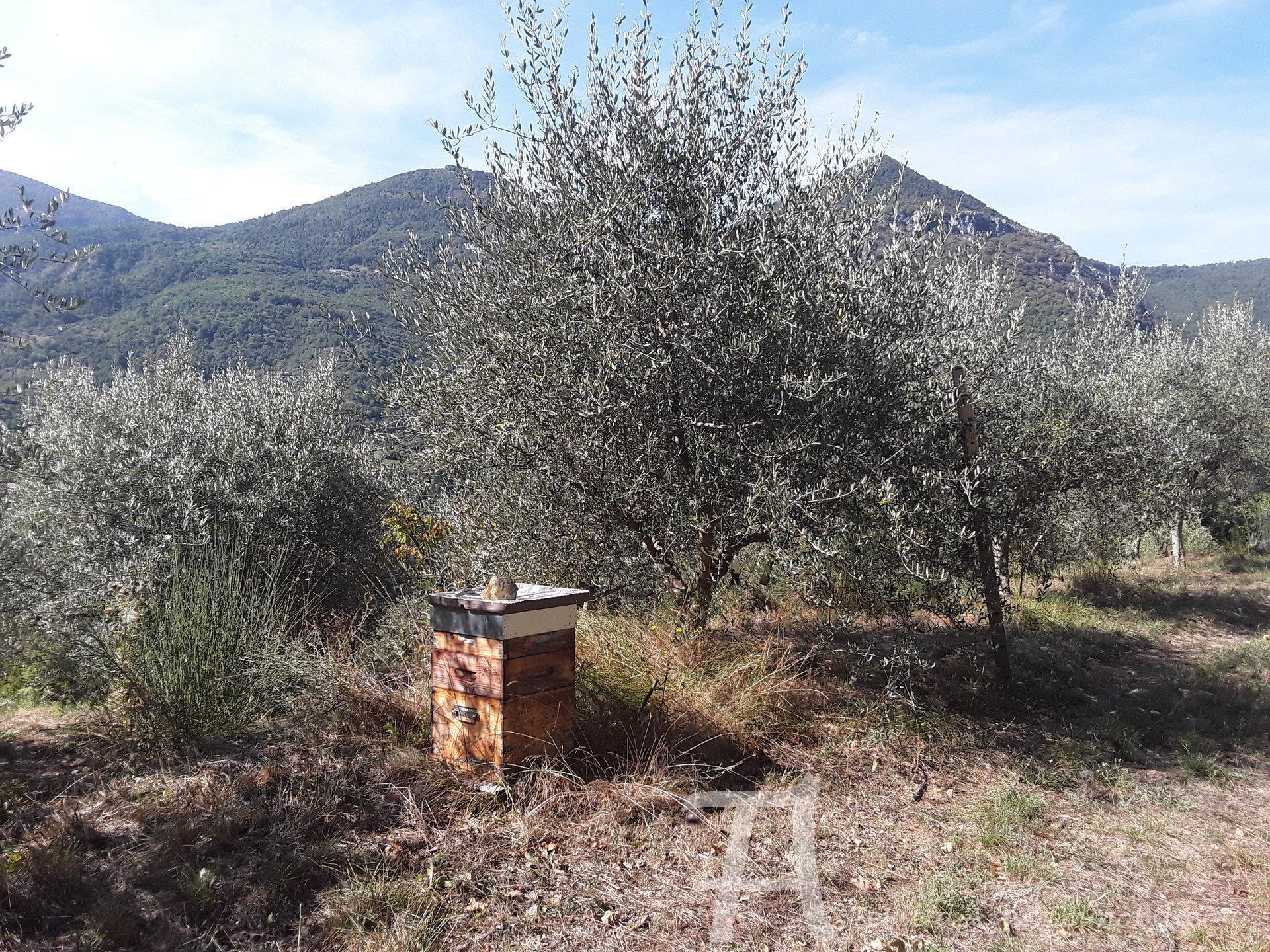 Vendita Bastide - Sospello (Sospel)