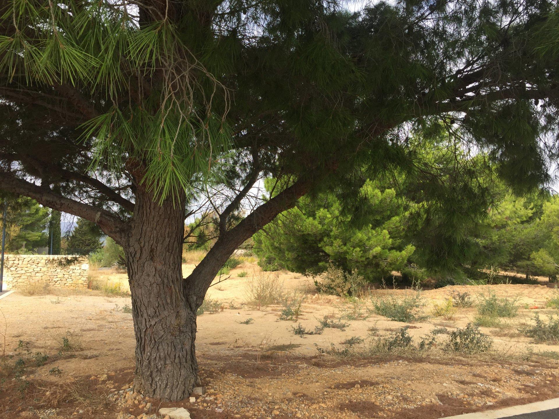 Sale Plot of land - Leucate
