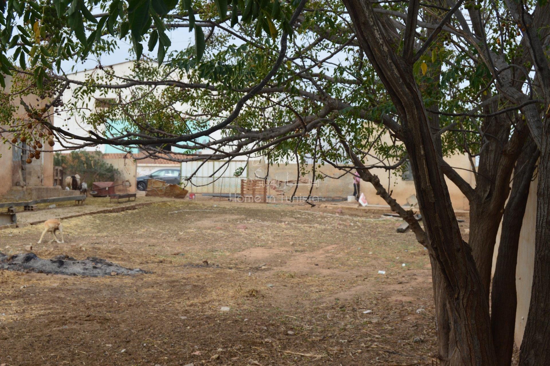 Sale Factory - Jebel El Oust - Tunisia