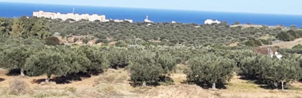 Vente Terrain constructible - Akouda - Tunisie