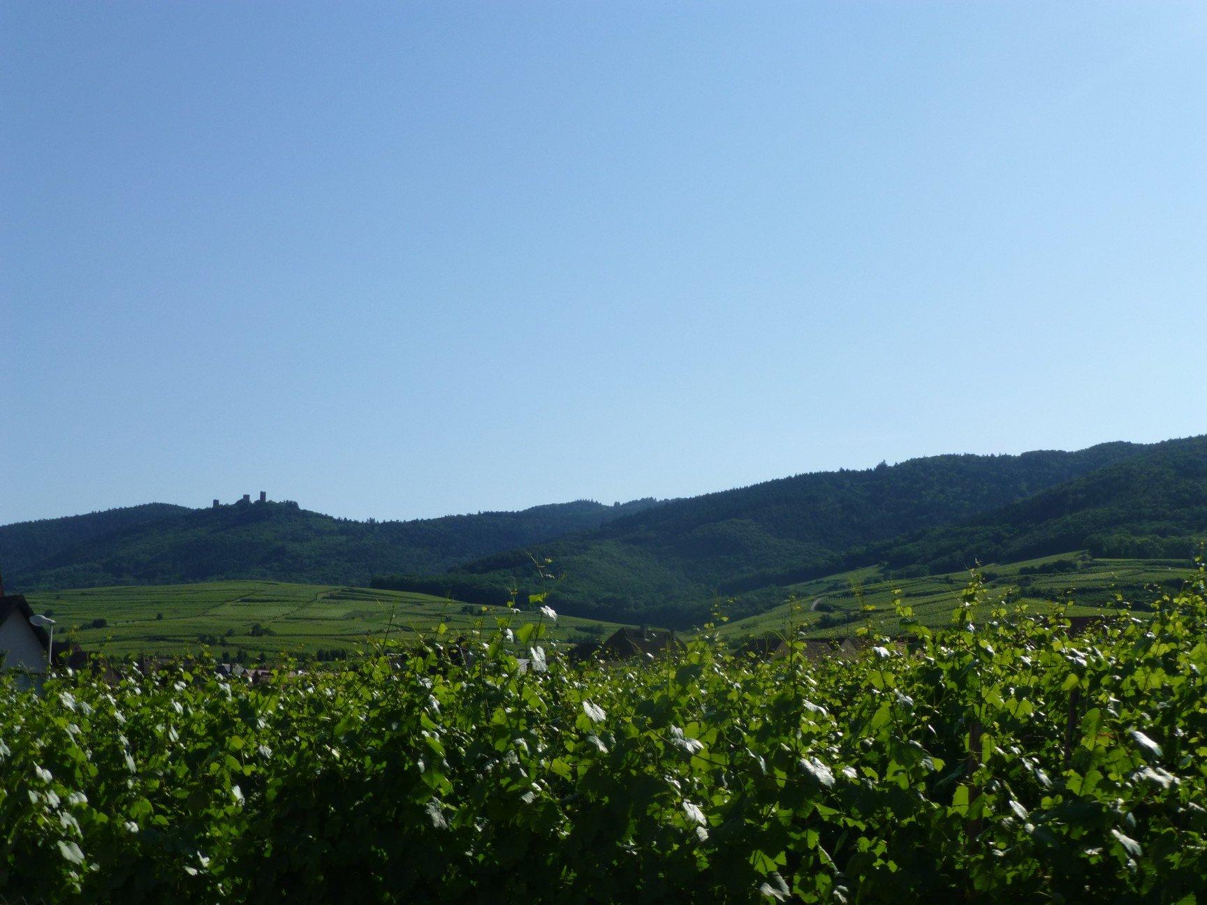 Ensemble immobilier au cœur du vignoble