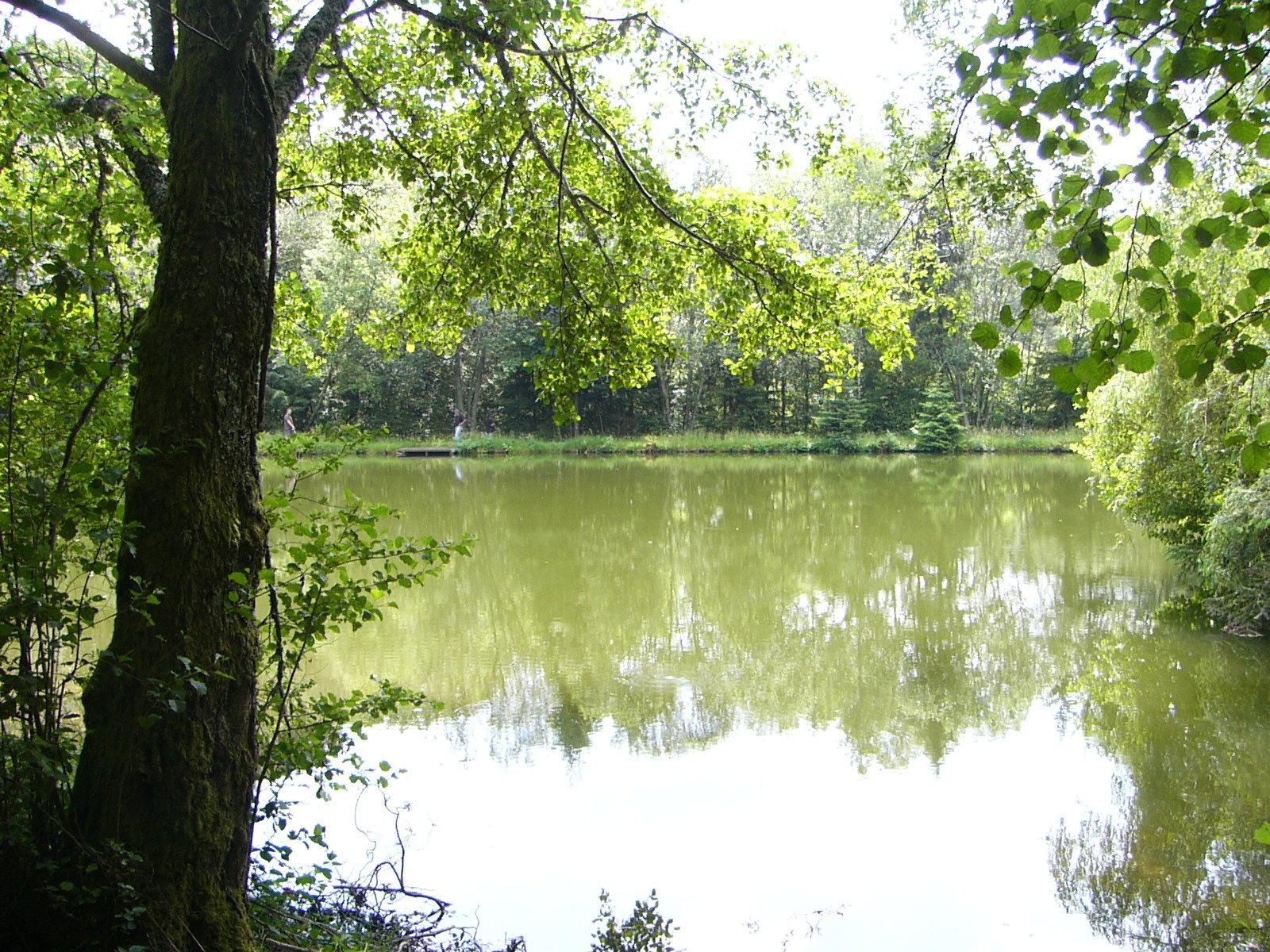 Waldgrundstück mit 5 Seen zum Verkauf bei Anost im Morvan.