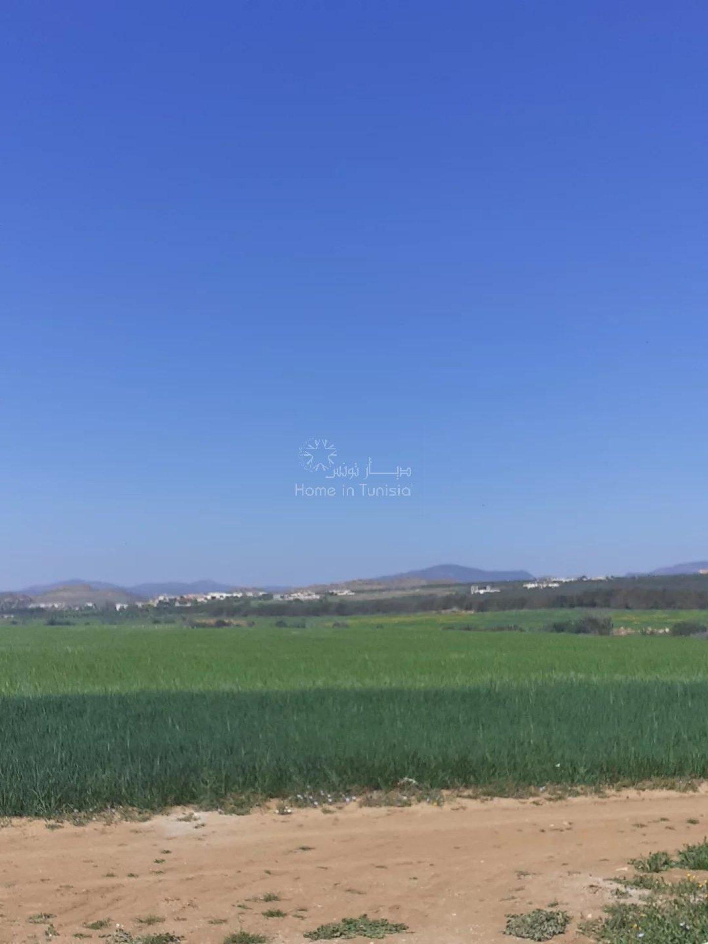 Terrain agricole a vendre hammamet sud