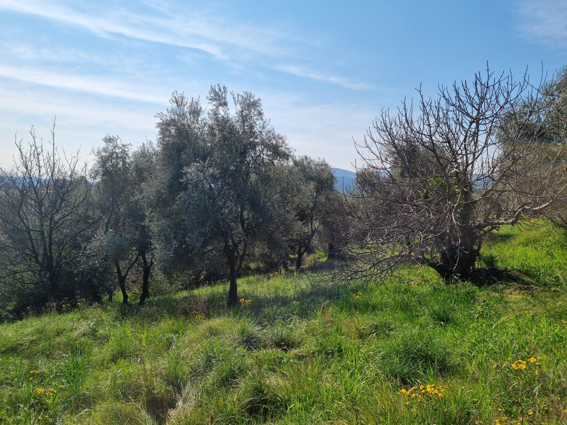 Vente terrain calme, vue dégagée à Grasse Saint Jacques