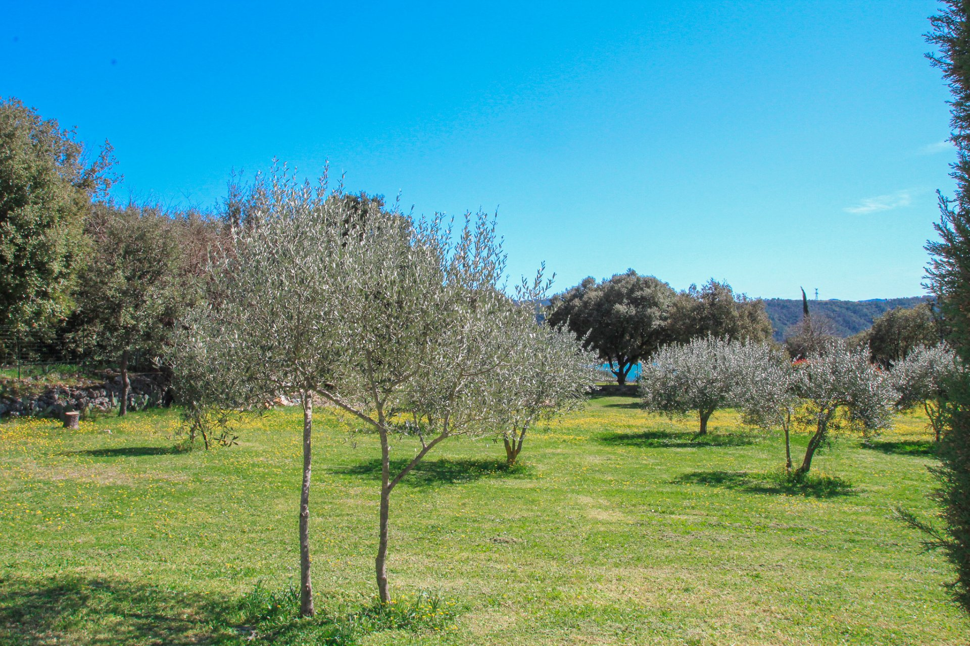 Villa in rural setting amoungst olive trees with view lake