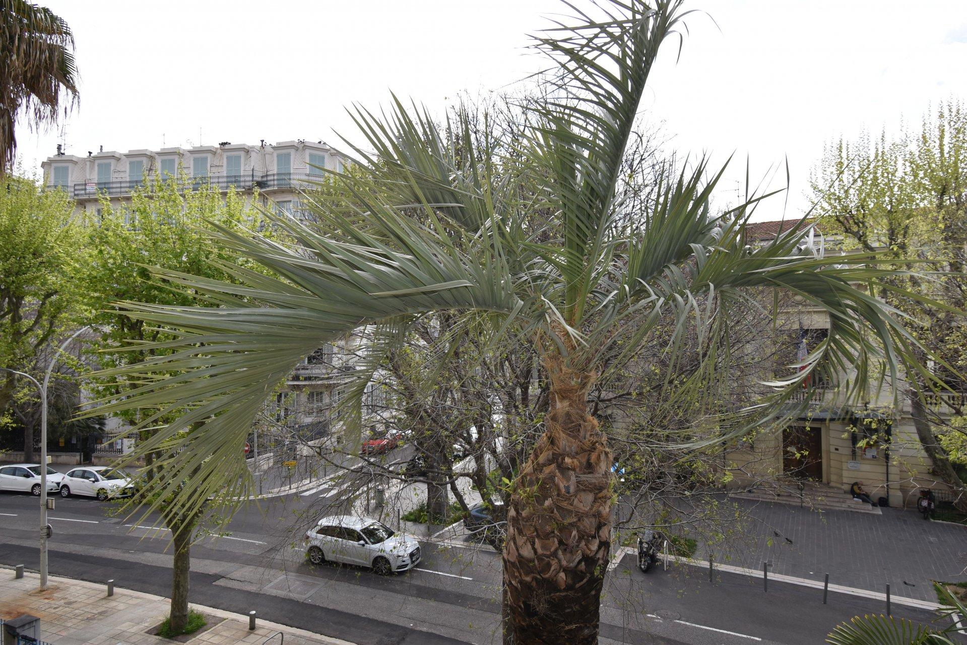 3 pièces Boulevard Dubouchage, parking collectif