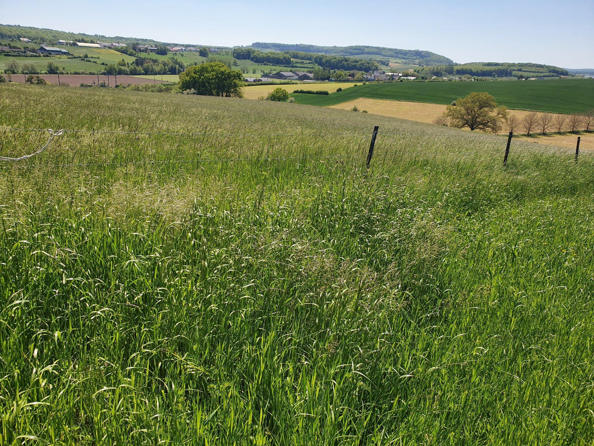 Sale Not constructible land - Hagelsdorf - Luxembourg