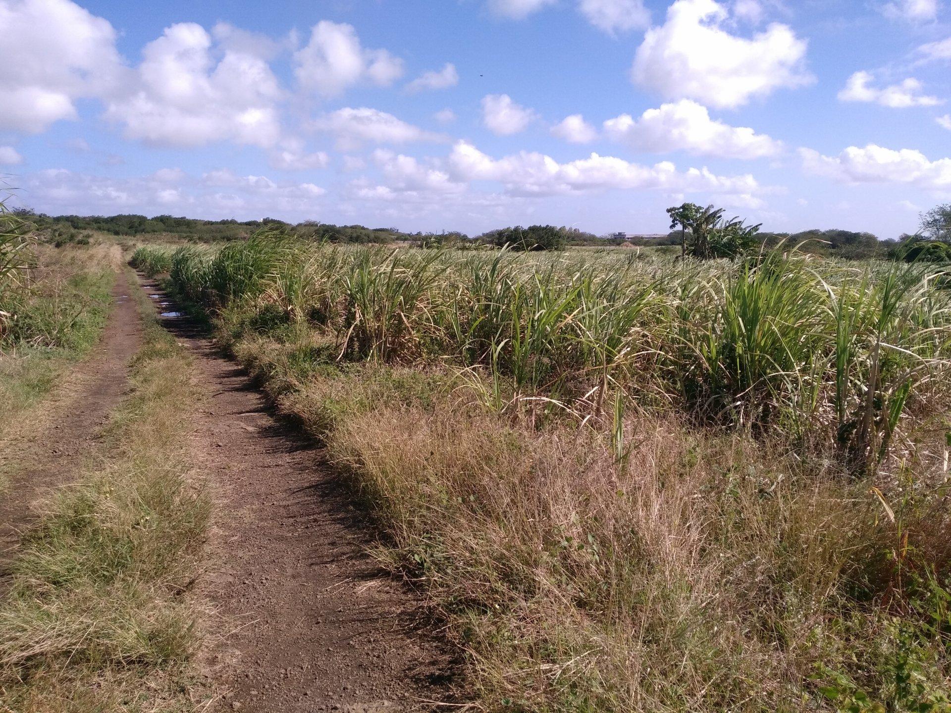 Beau terrain agricole plat
