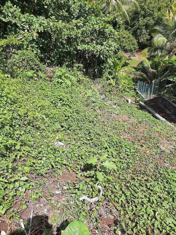 Vends Terrain 1064m², Trinité