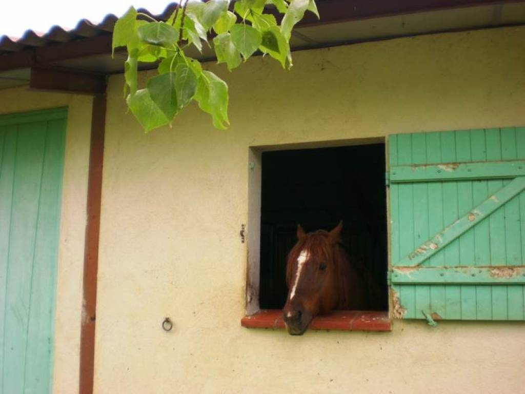 horse looking through the window