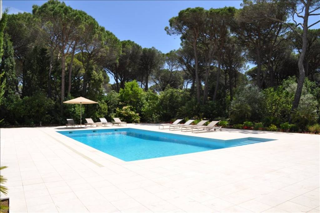 beautiful swimming pool with its huge terrace lined with pine trees