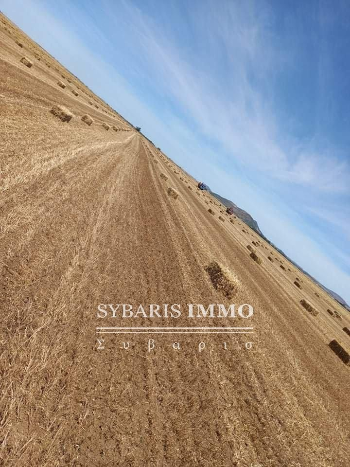 Vente Exploitation agricole - Zaghouan - Tunisie