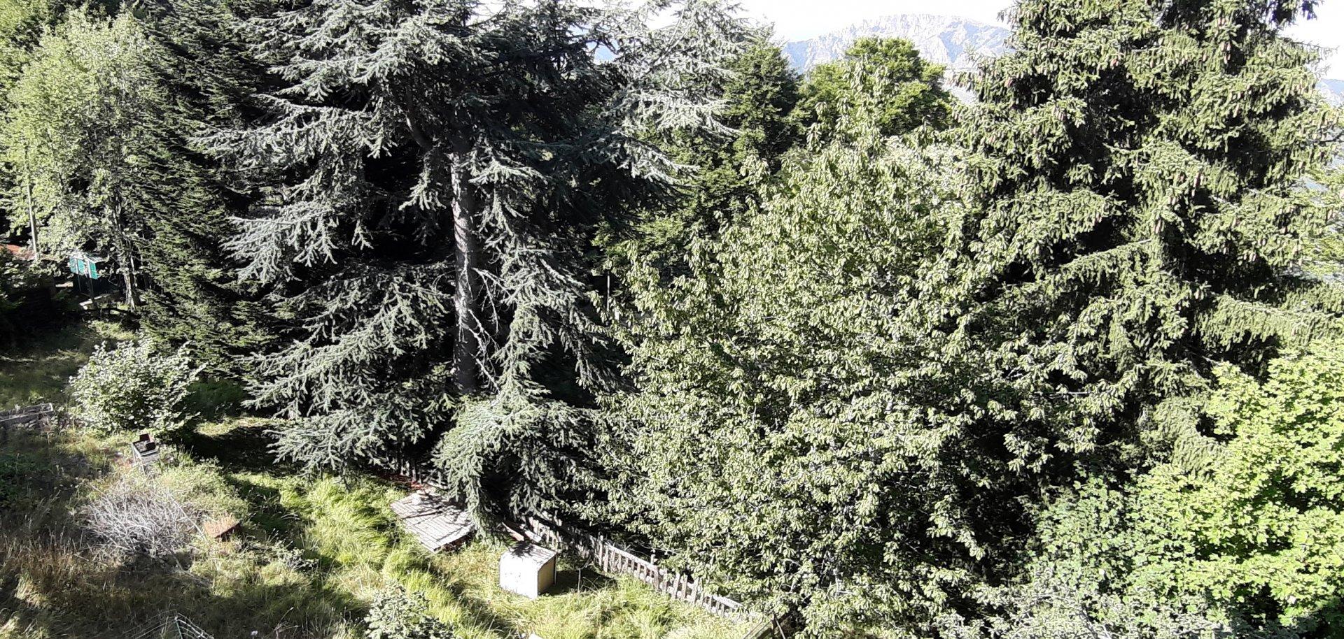 Peira Cava : Duplex avec Jardin