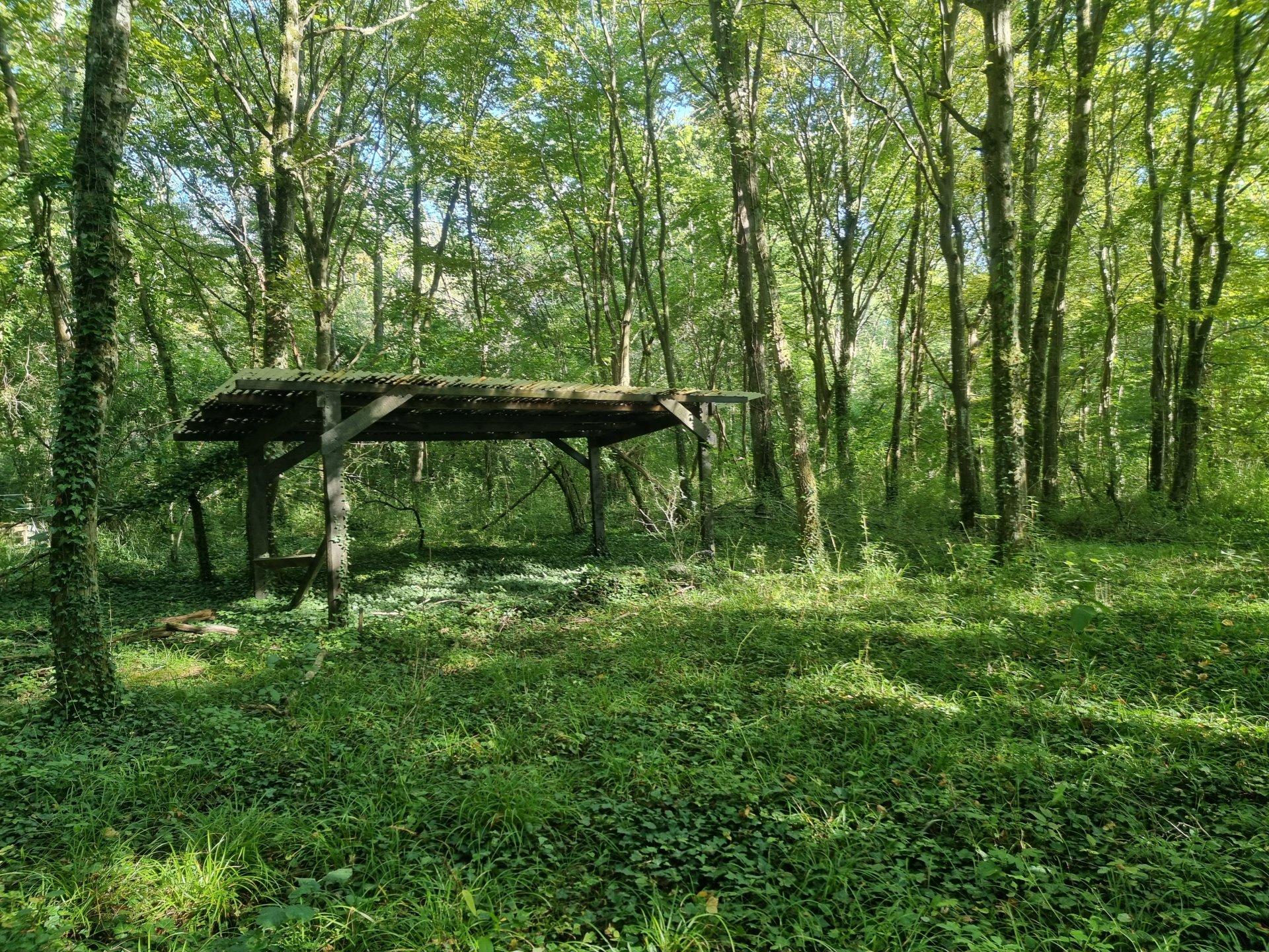 Montigny sur Loing : Terrain de loisirs boisé