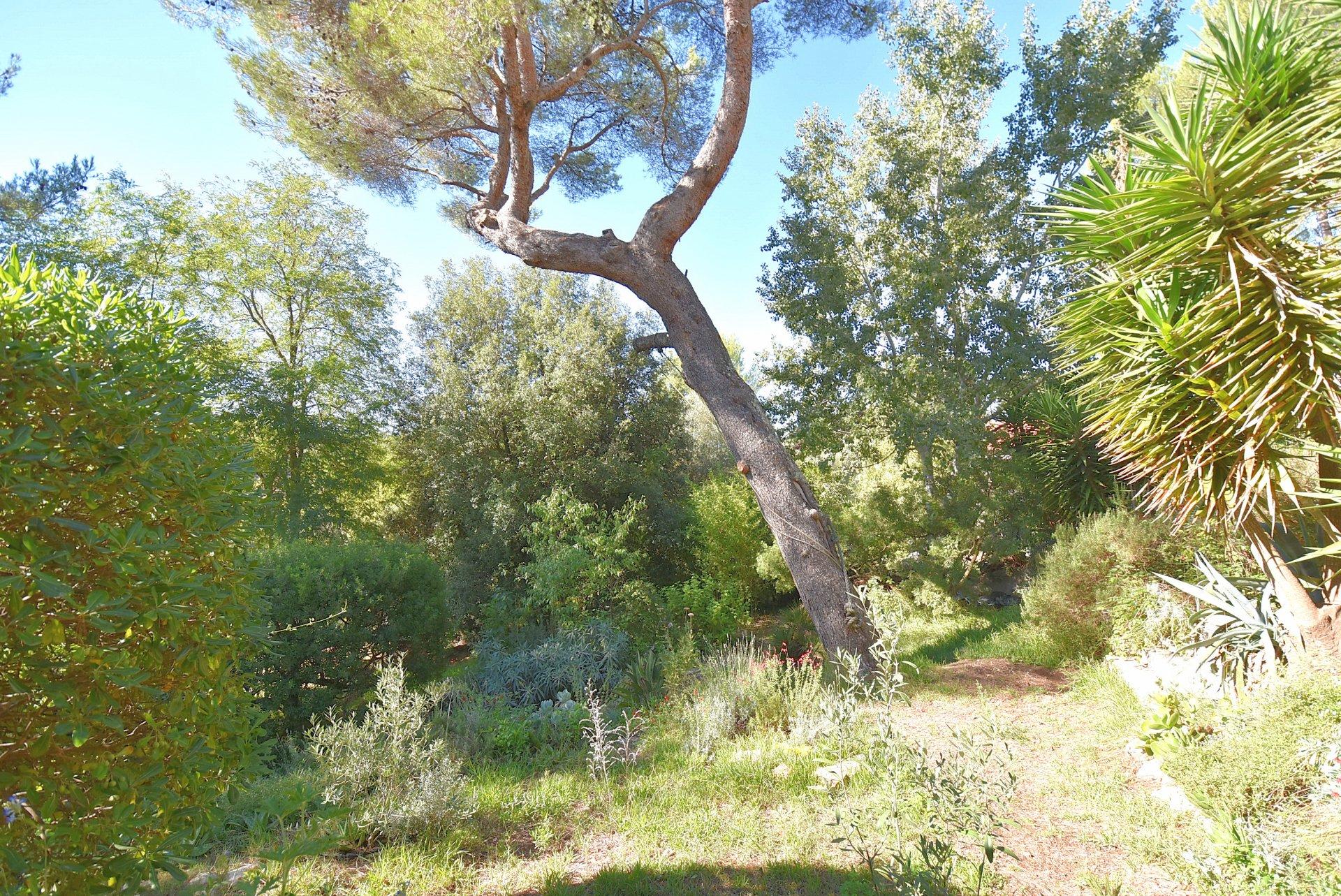 Location Villa - Biot Bois Fleuri